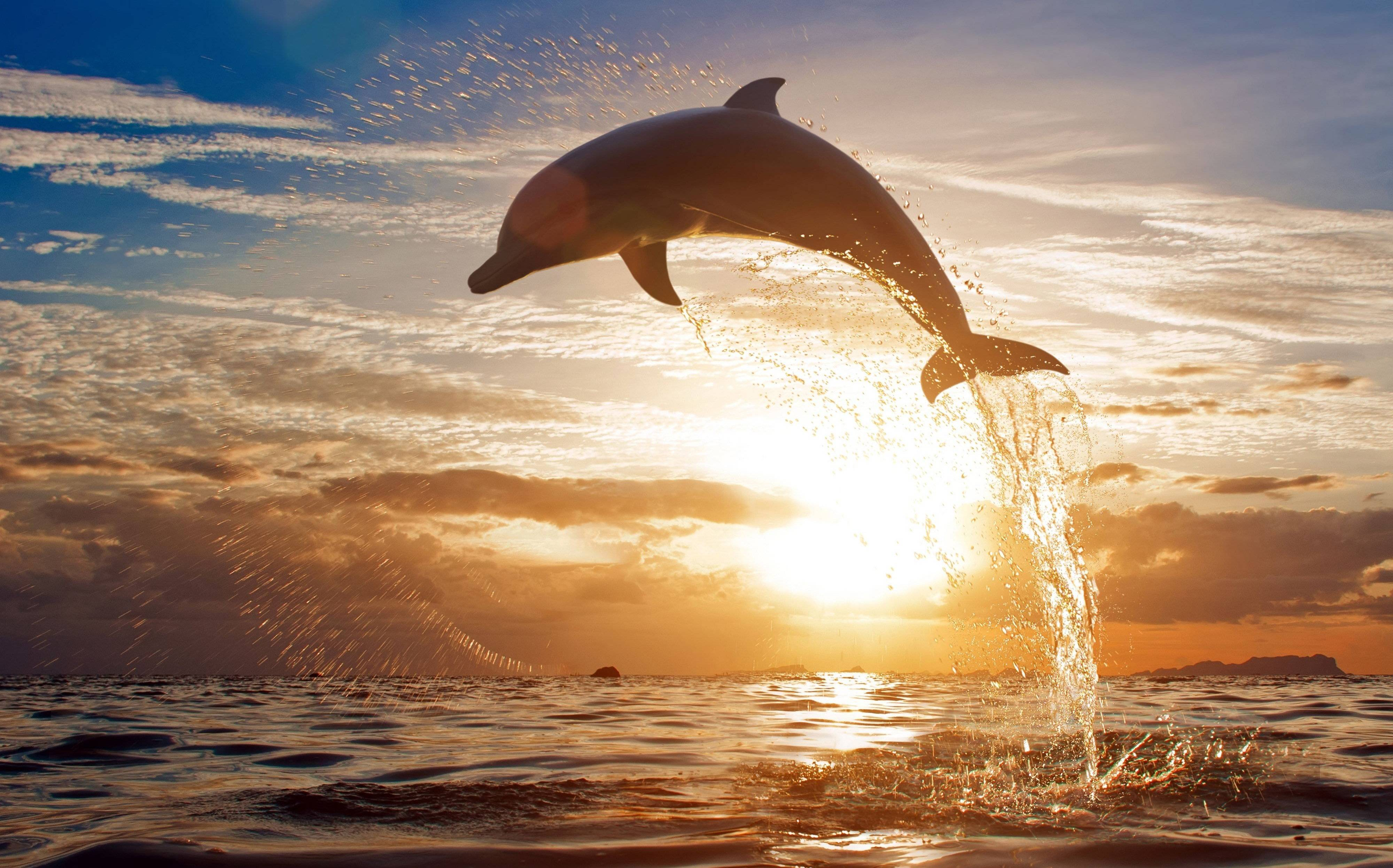 175 Dolphin Wallpapers | Dolphin Backgrounds Page 2