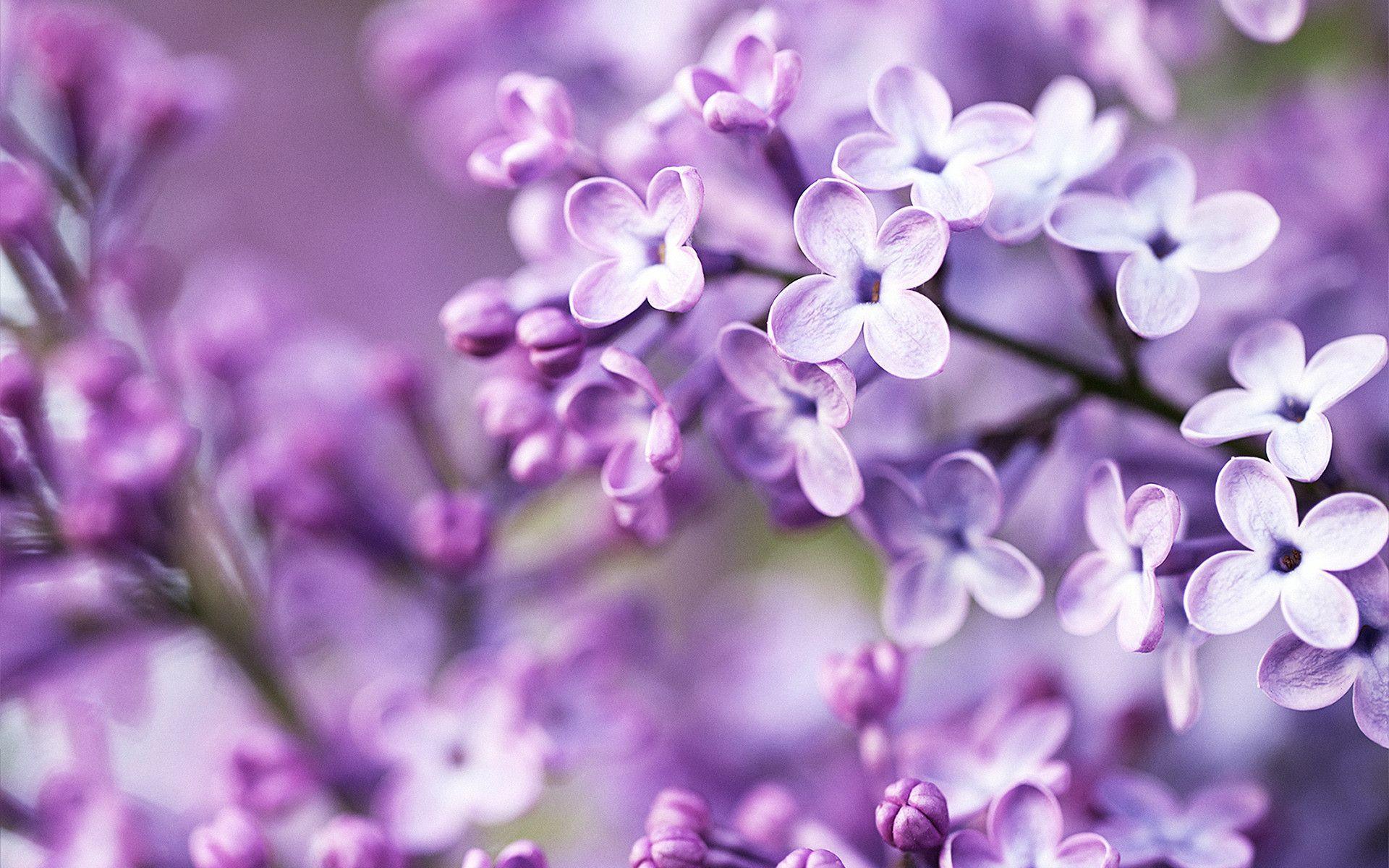 Purple Flower Wallpapers Full Hd Wallpaper Search