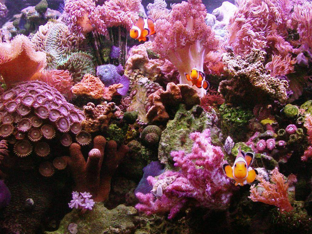 aquarium backgrounds coral - photo #23