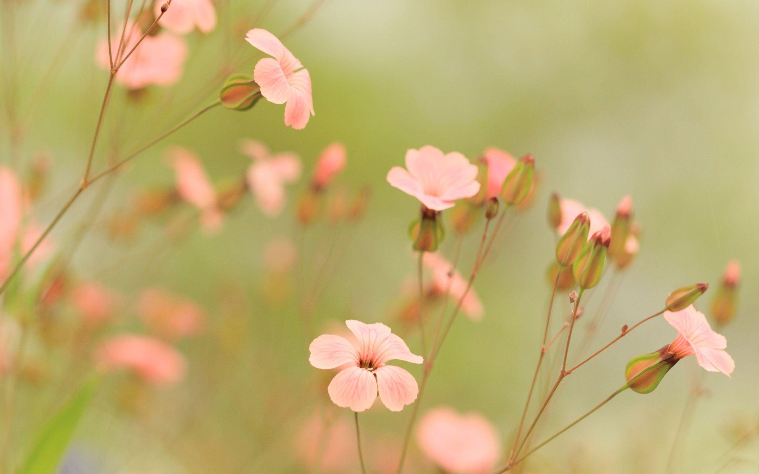 Flowers For Summer Flower Wallpapers