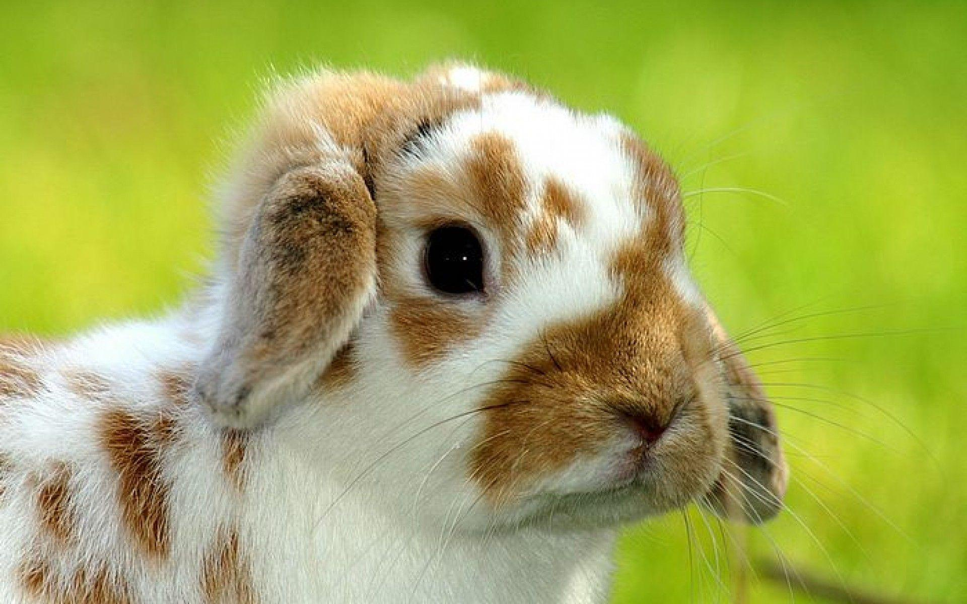 Playboy Bunny Backgrounds