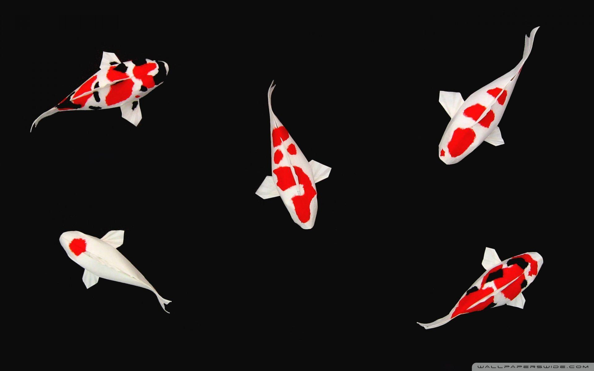 Koi fish backgrounds wallpaper cave for All black koi fish