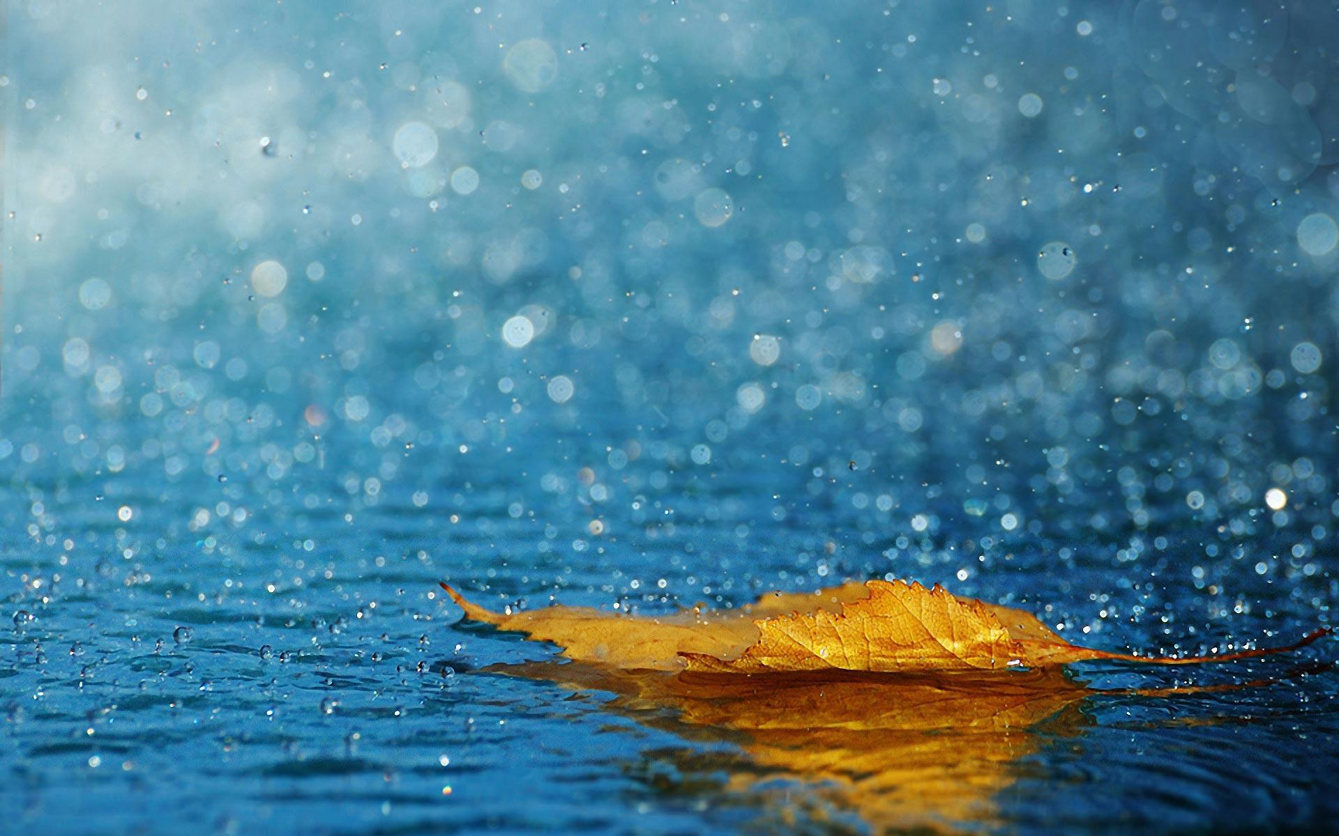 Rain Wallpaper HD Widescreen 4