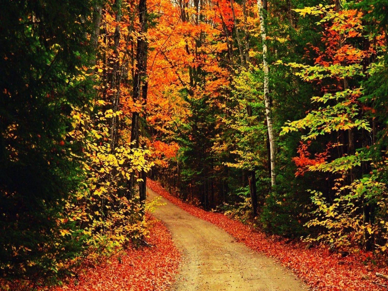 autumn wallpaper 007 free - photo #49