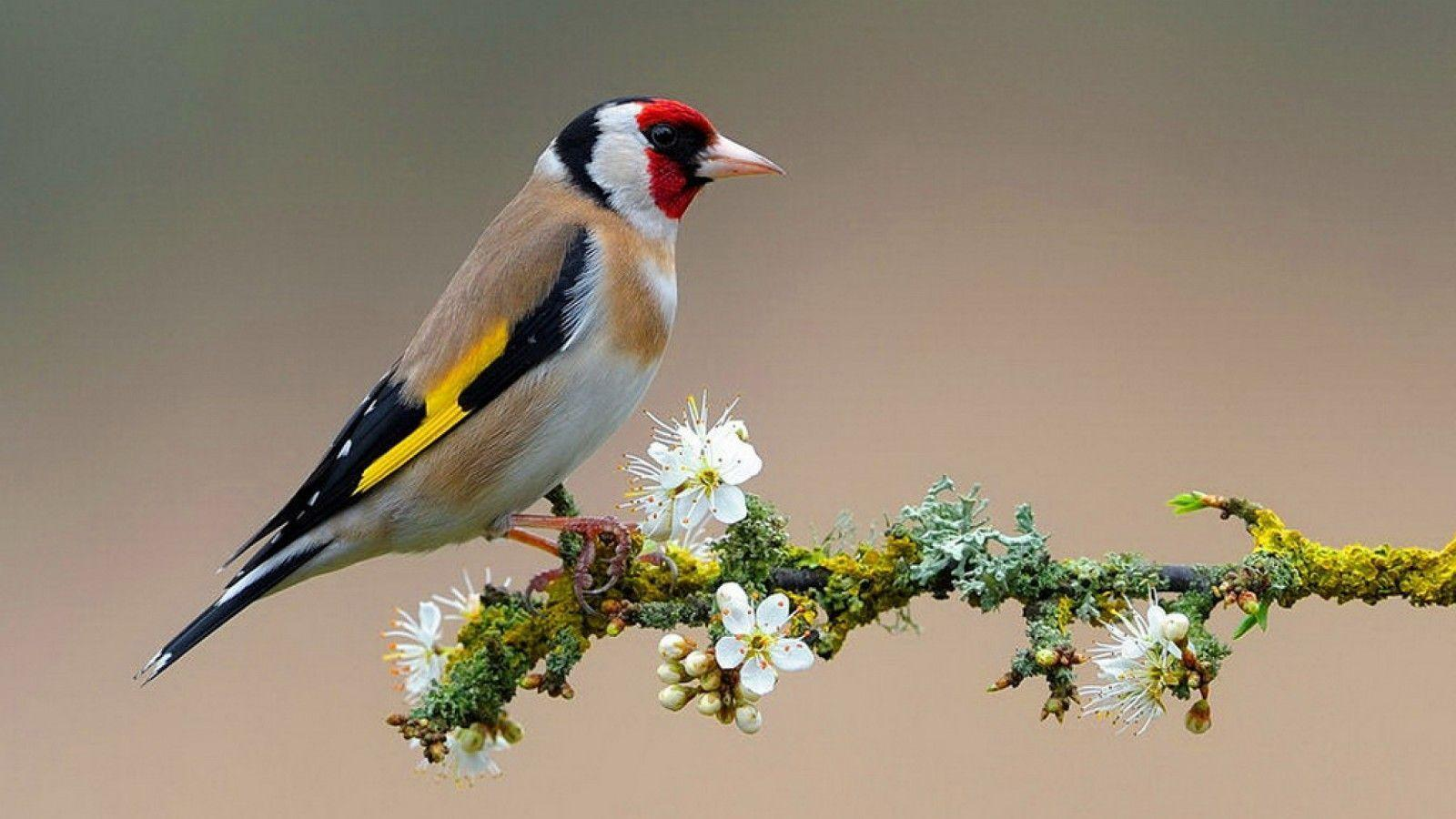 Birds Flowers Wallpaper