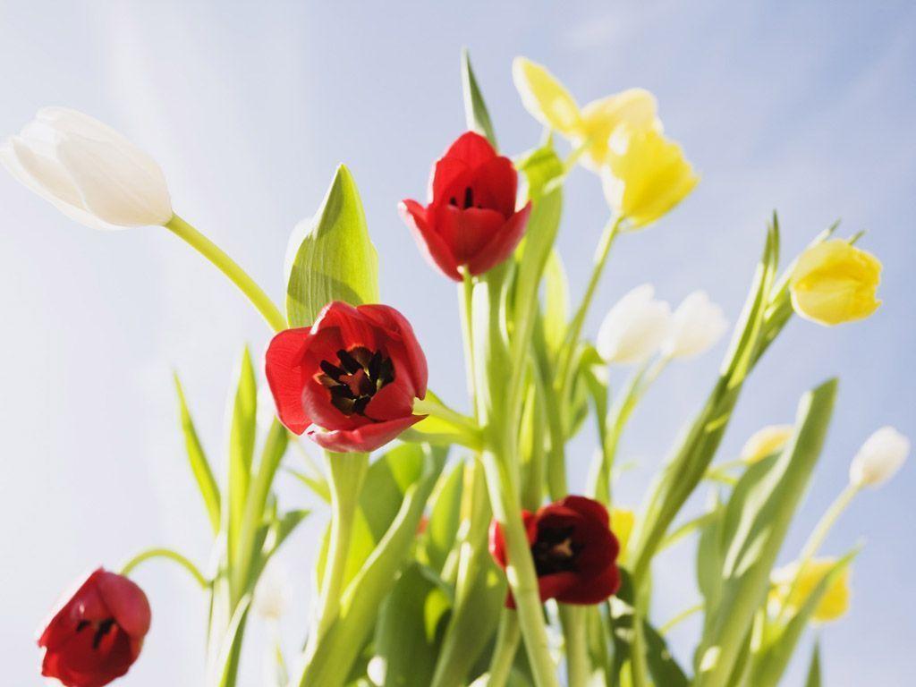 Bright Flower Wallpaper: Bright Flower Wallpapers