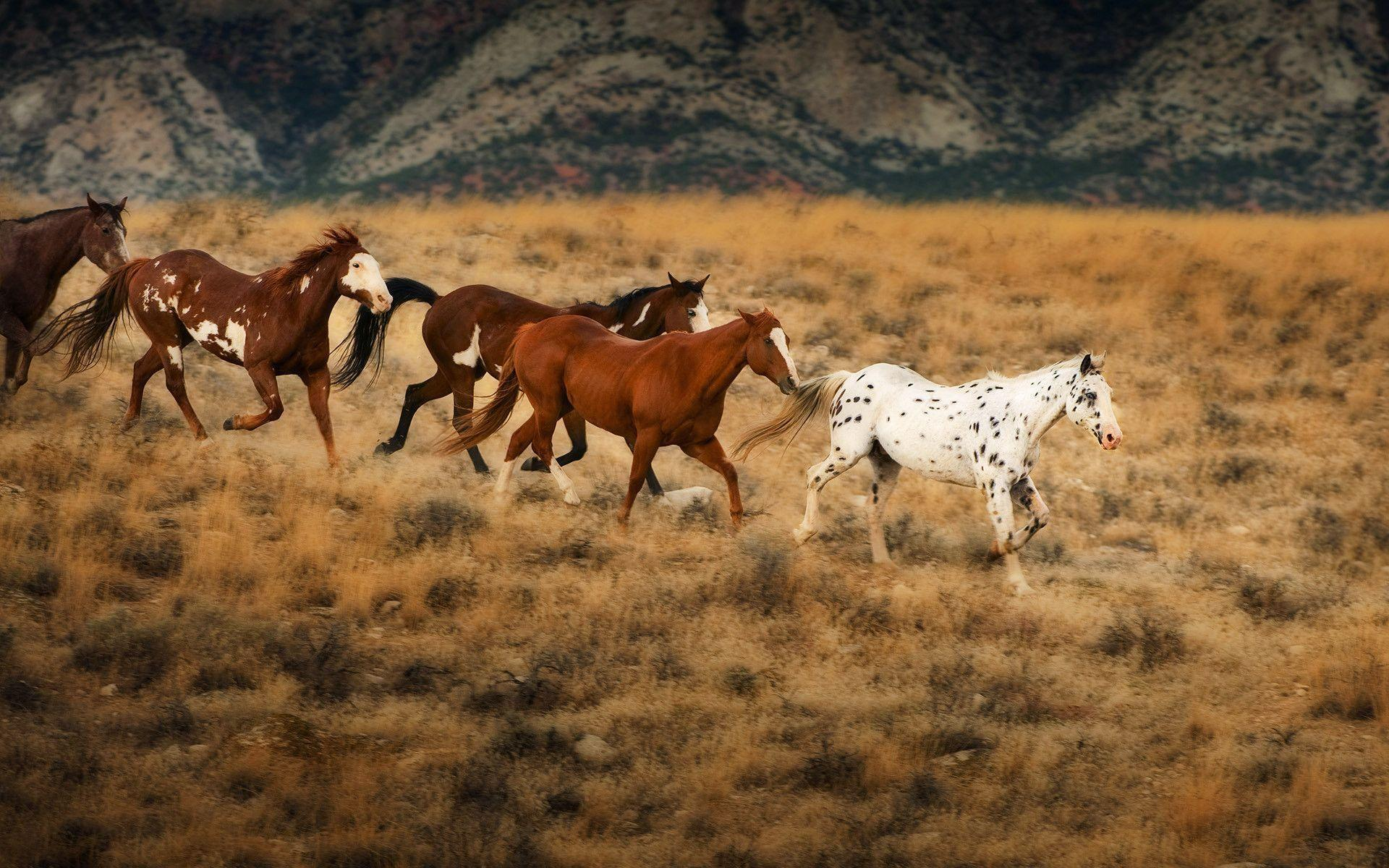spring wild horse wallpaper - photo #49