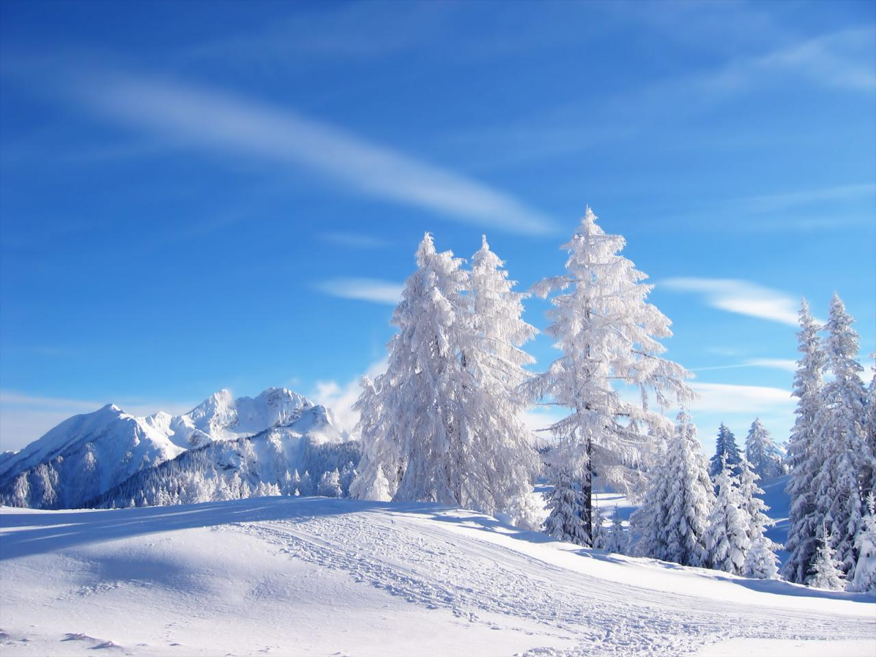 Snow Trees Wallpaper Backgrounds 1 HD Wallpapers