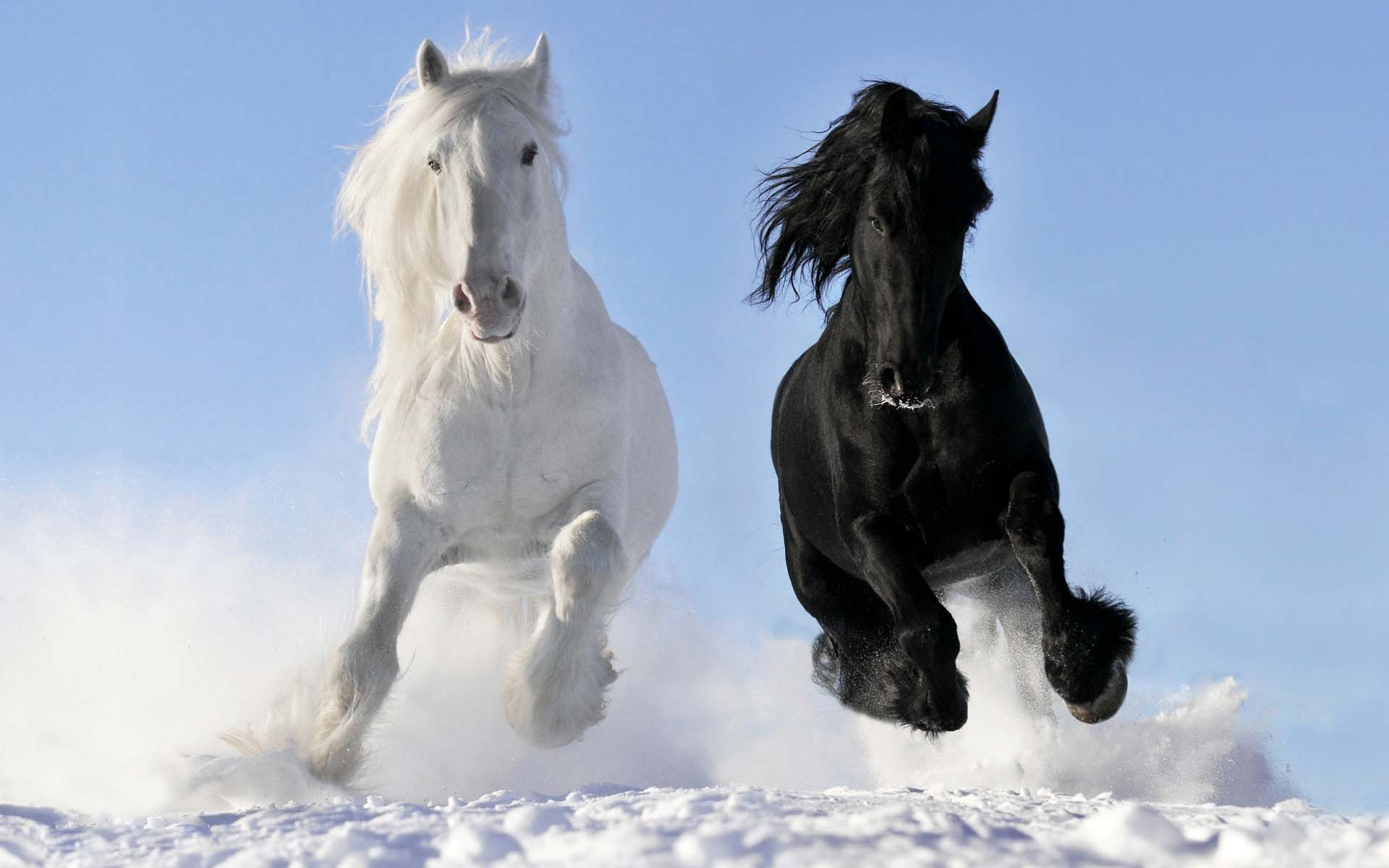 Images For Wild Horses Wallpaper