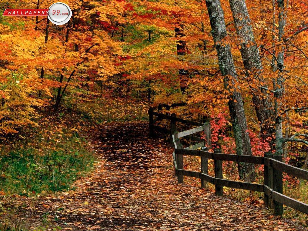 free desktop backgrounds for fall – 1024×768 High Definition ...