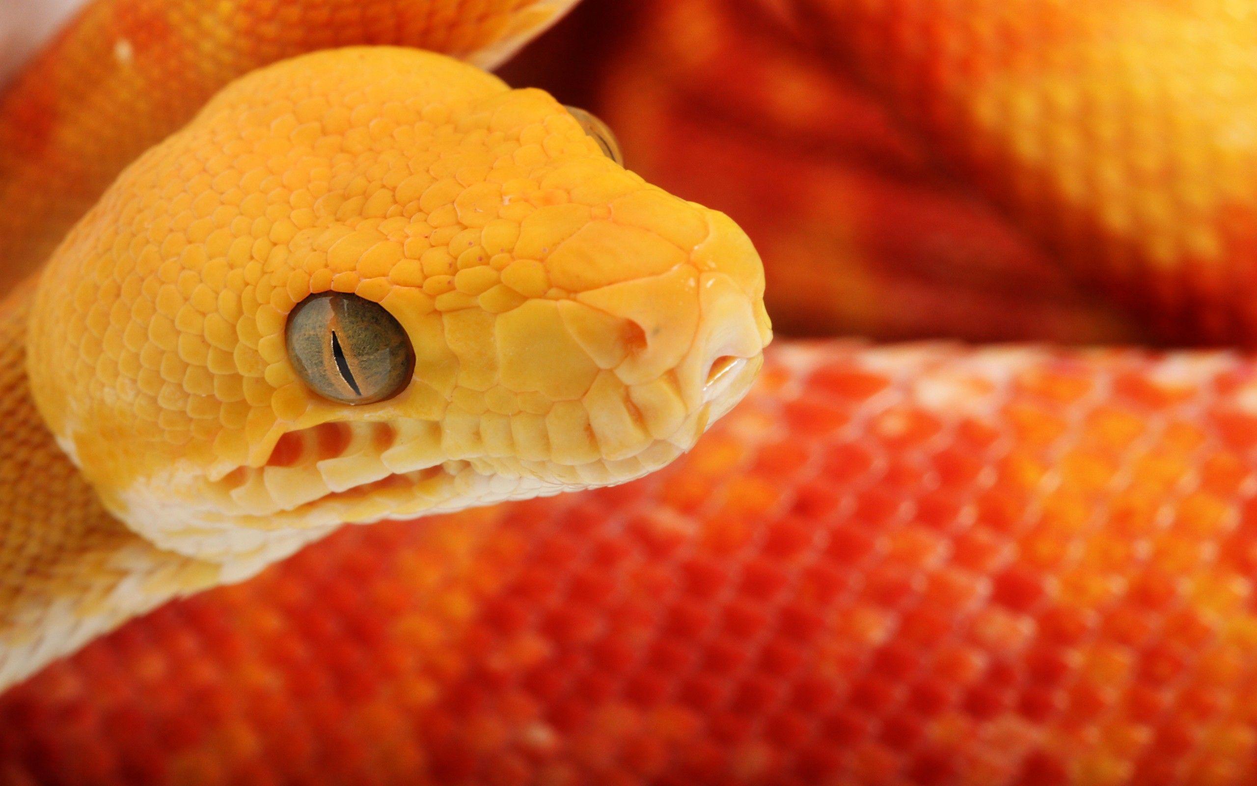 snake wallpaper | snake wallpaper - Part 2
