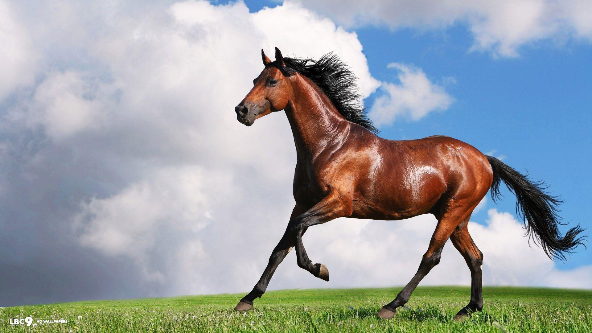Free horse backgrounds wallpaper cave - Free horse backgrounds ...
