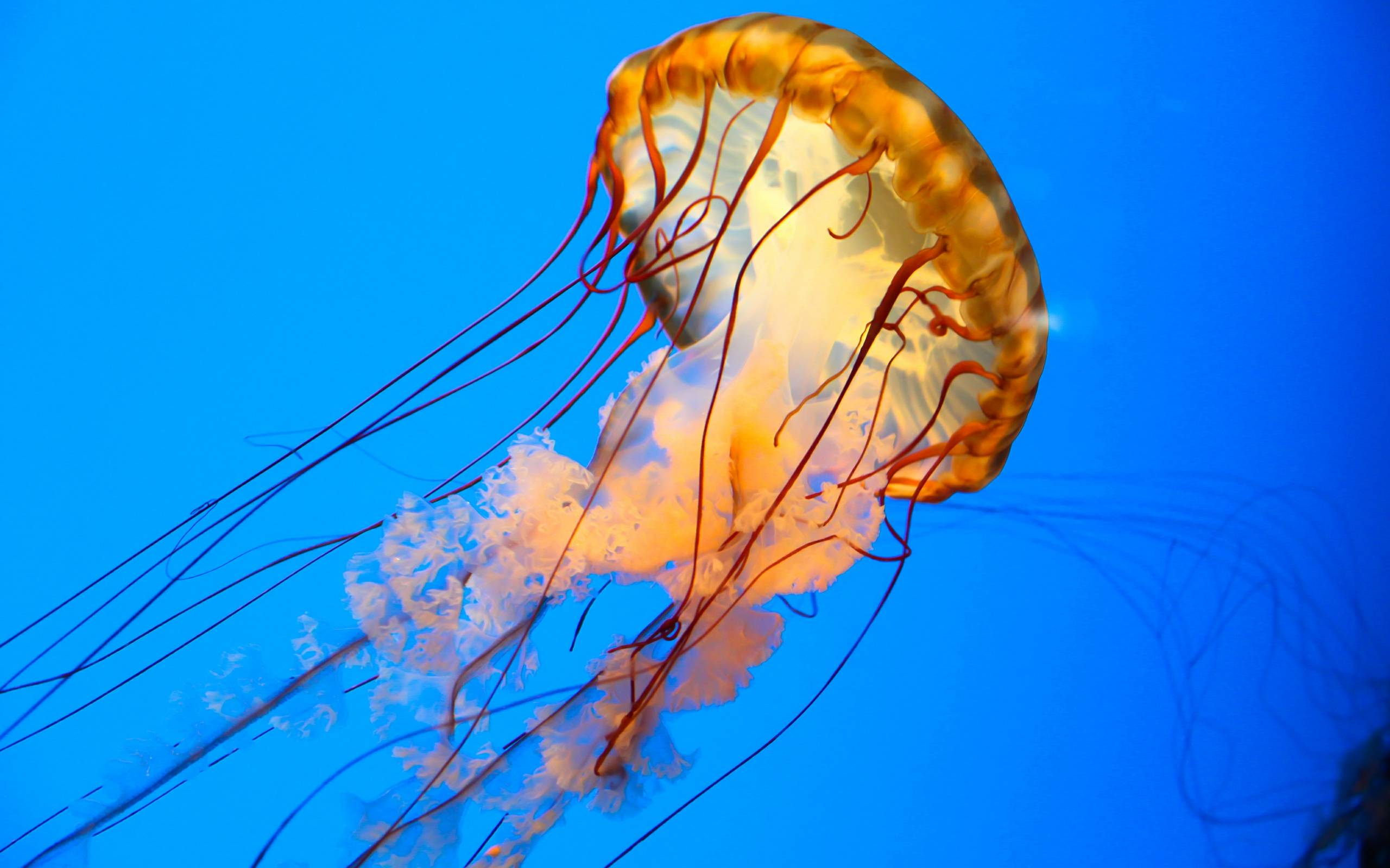 full hd wallpaper jellyfish - photo #36