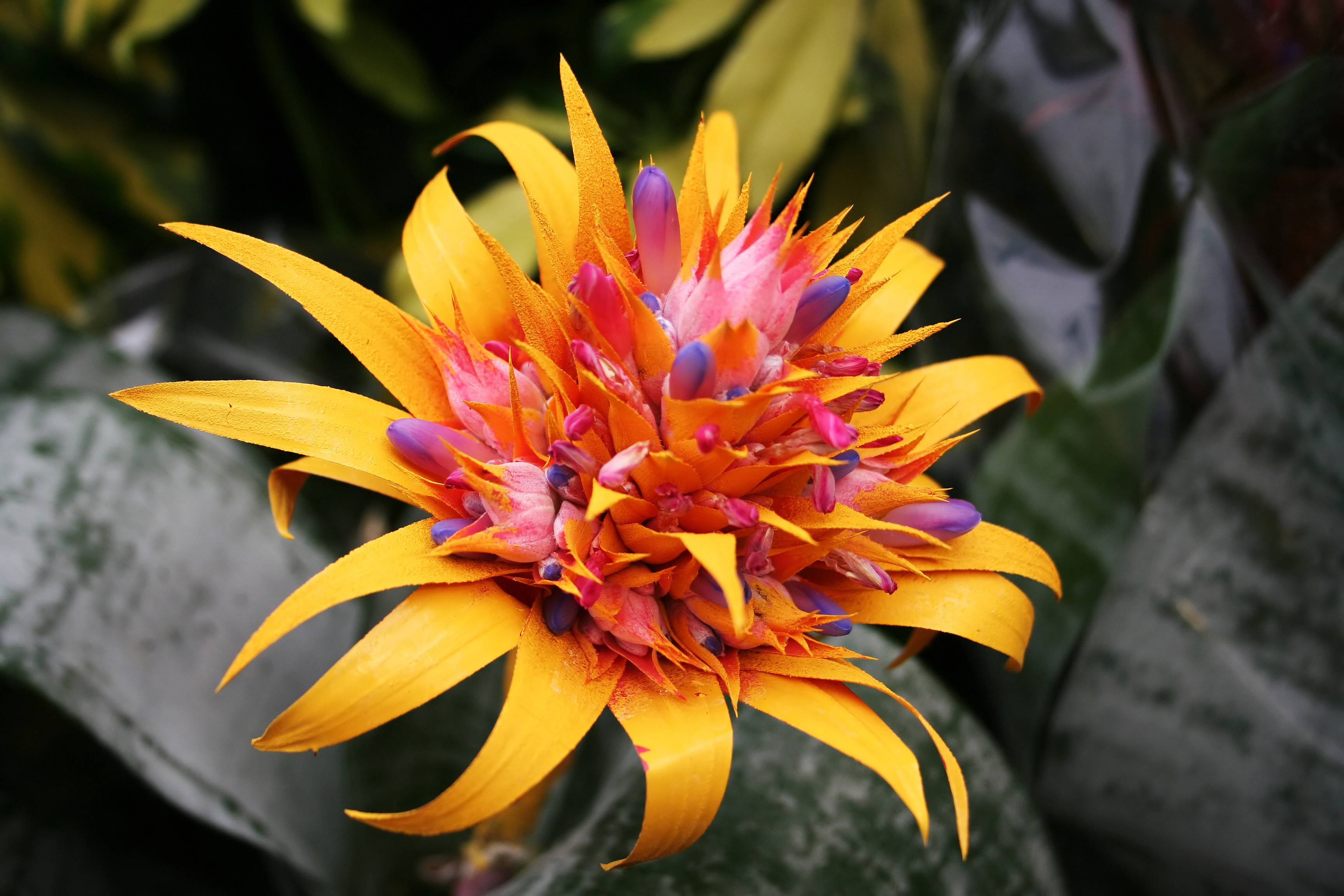 Flowers For Tropical Wallpaper