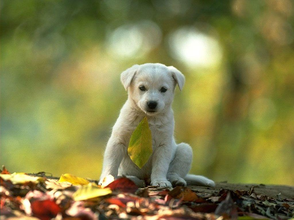 Free wallpapers of animals wallpaper cave 3d animals wallpapers 3 wallpapers online amazing wallpapers voltagebd Images