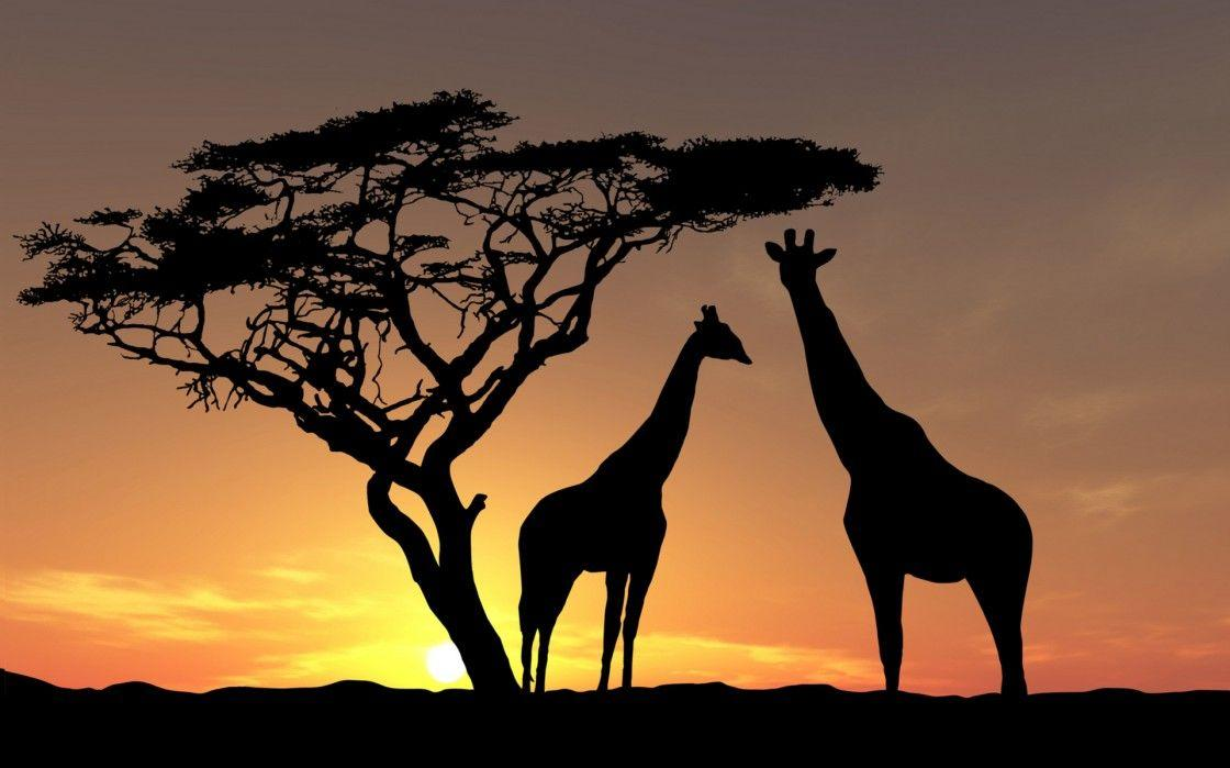 Unusual Cropped Africa Wallpaper : Desktopaper | HD Desktop Wallpaper