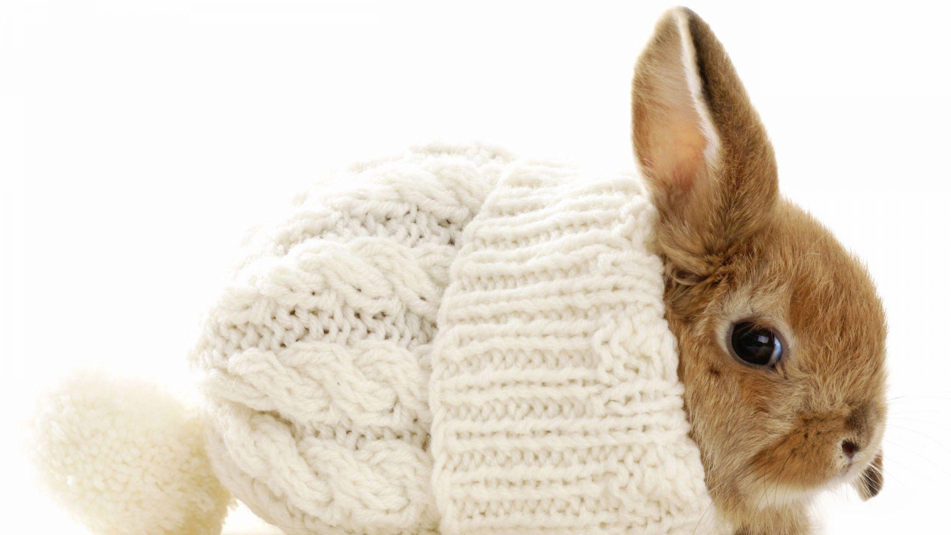 Xmas Stuff For Christmas Rabbit Wallpaper
