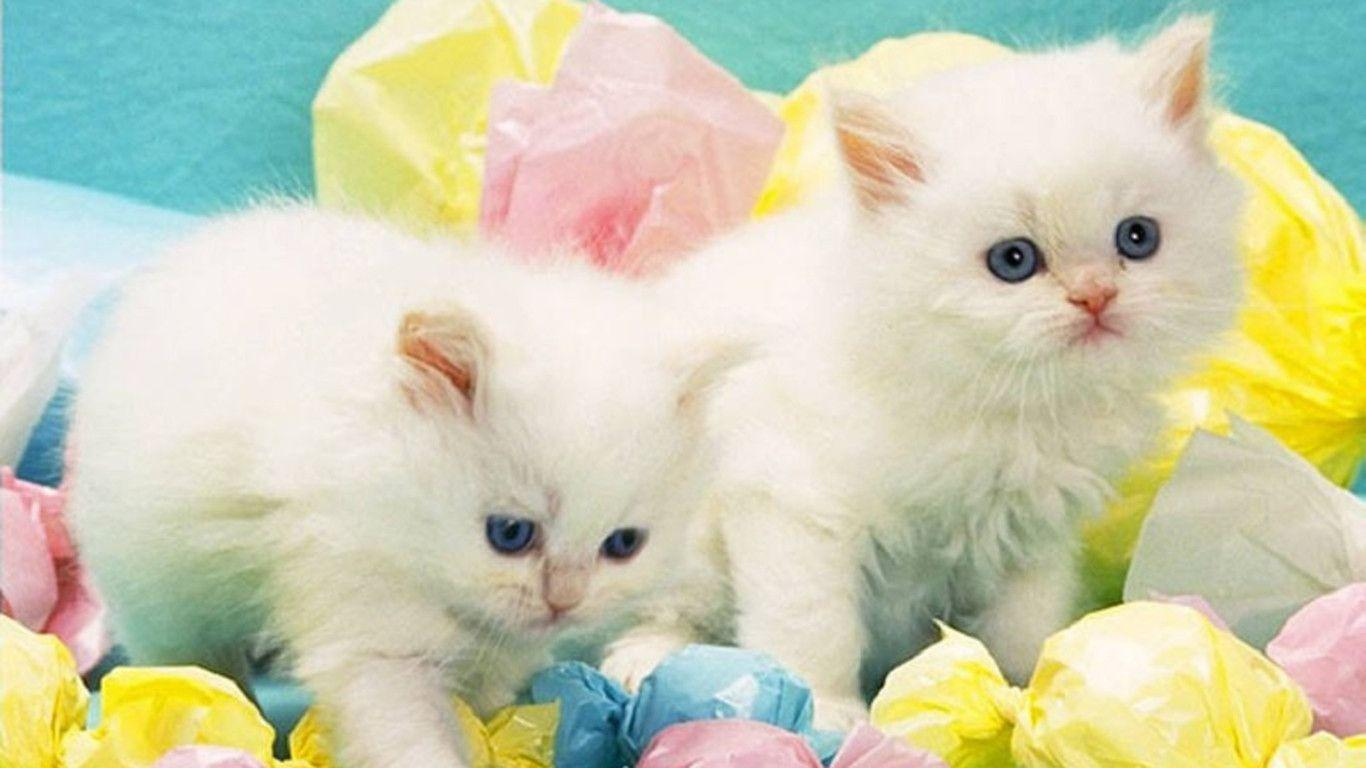 Cute White Cats Wallpapers Wallpaper