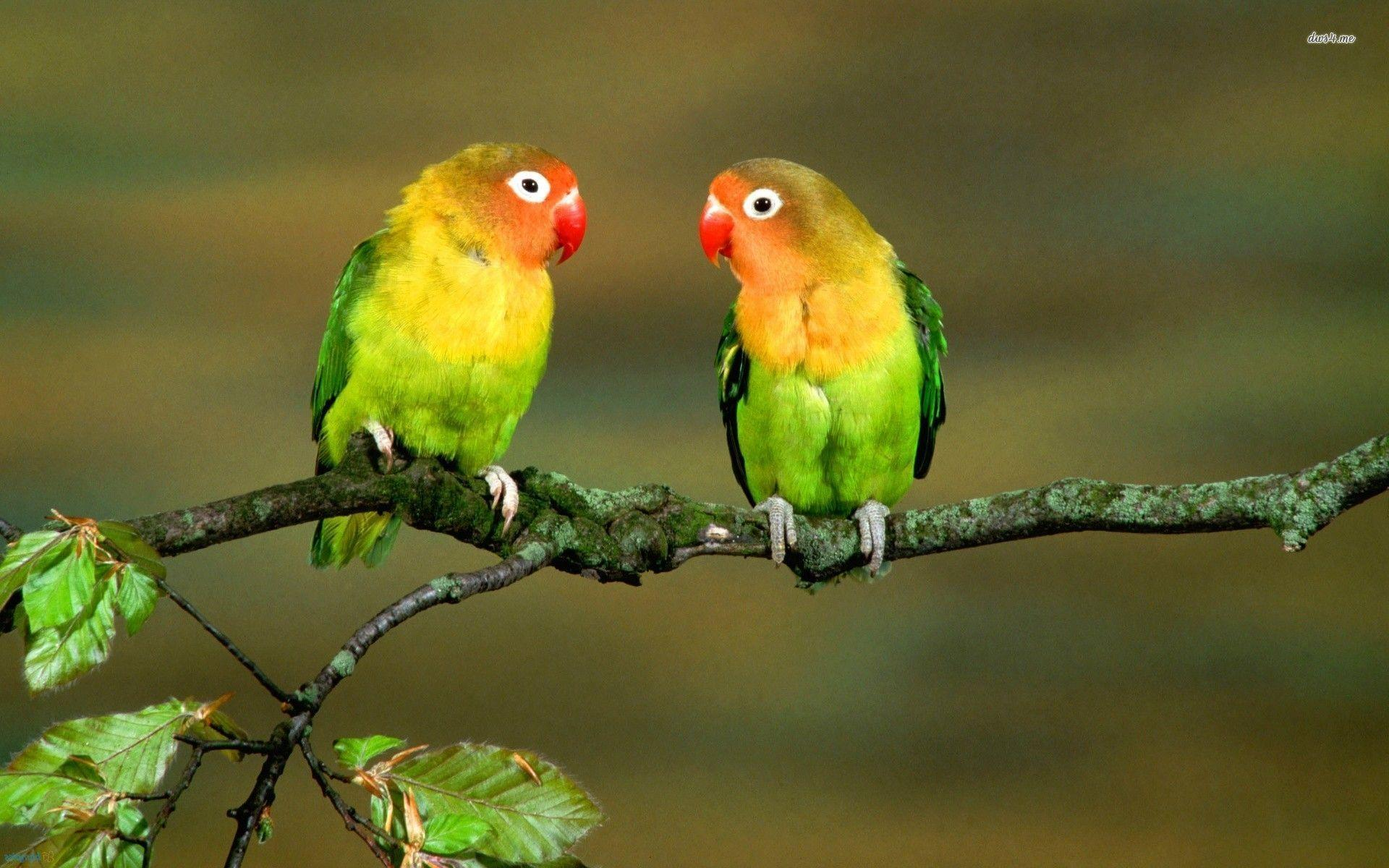 Wallpapers Love Birds: Wallpapers Of Love Birds
