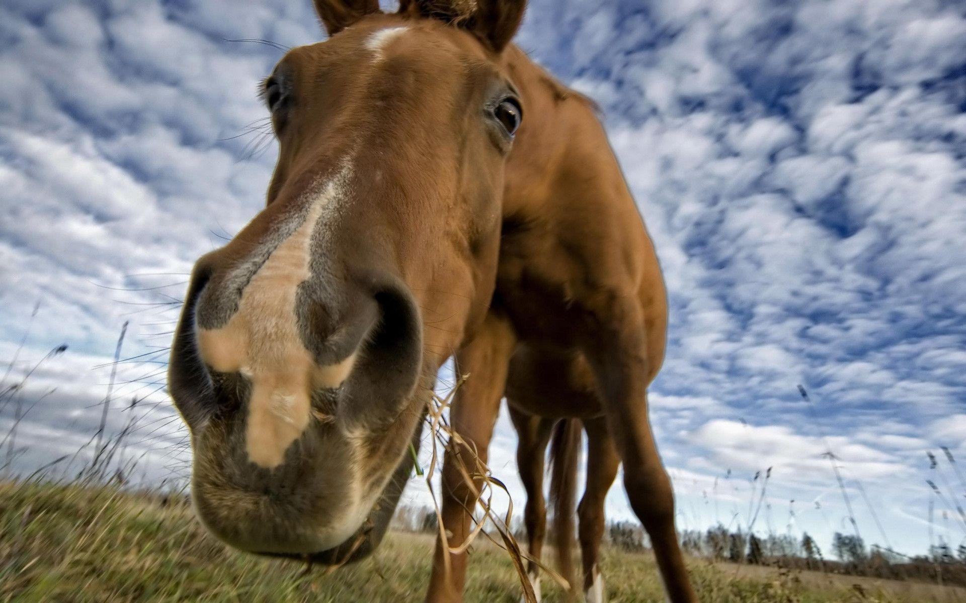 1920x1200 Hello Horse Wallpaper