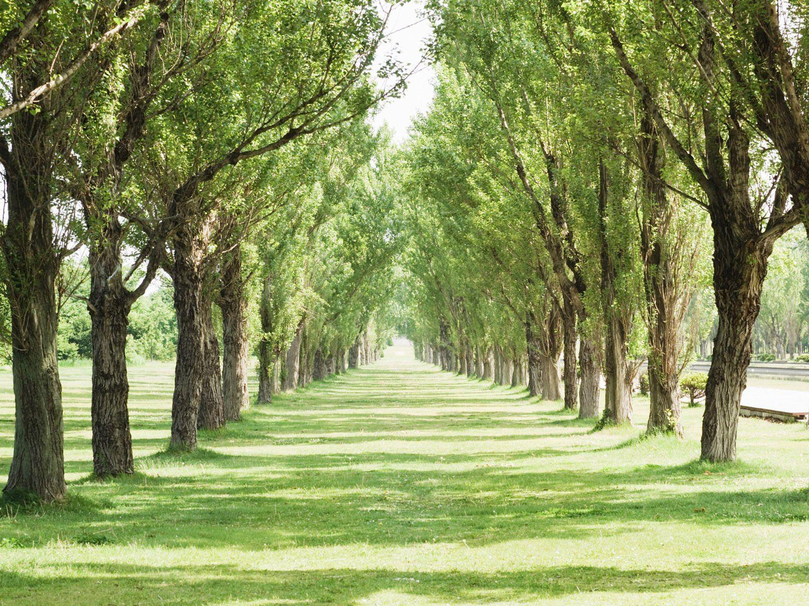 garden hd green wallpapers