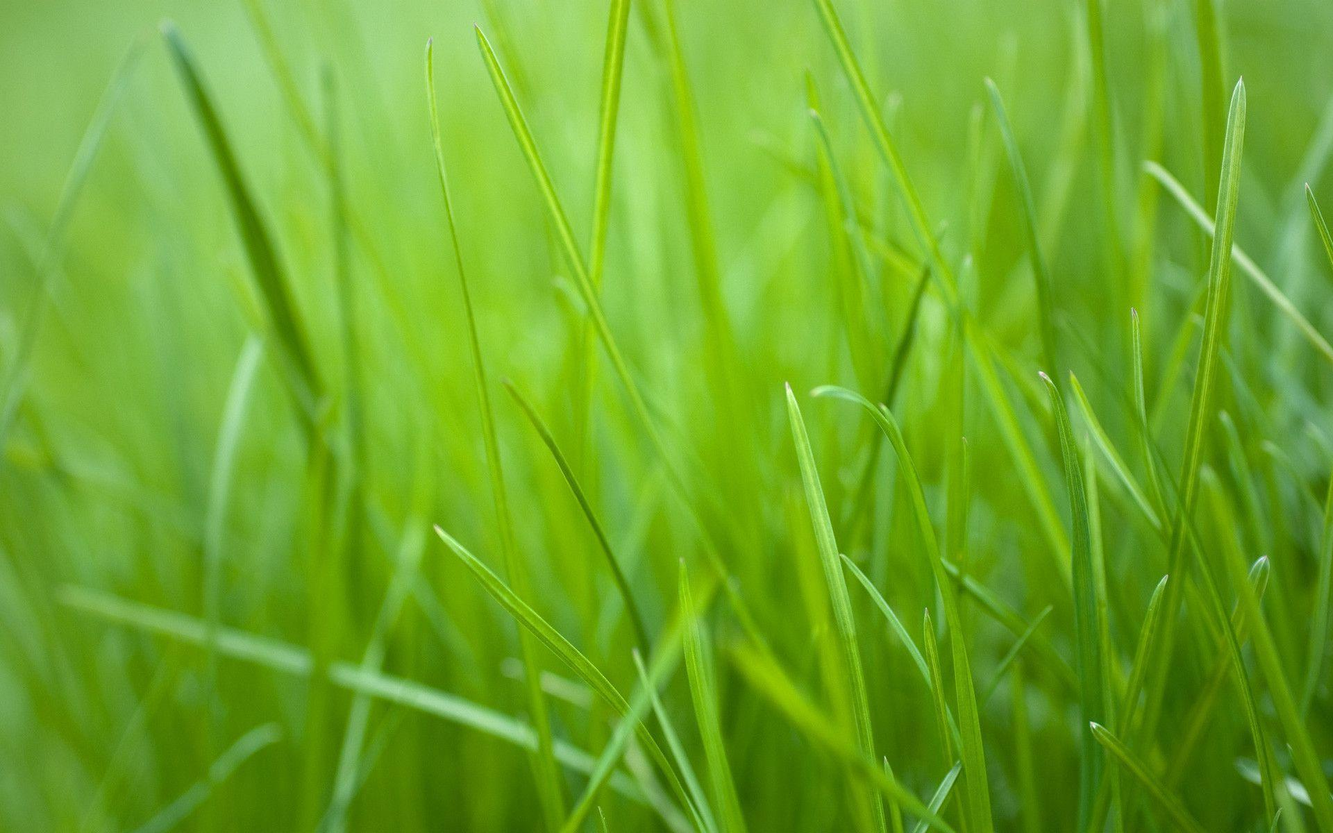 Nature Images 2mb: Green Grass Wallpapers