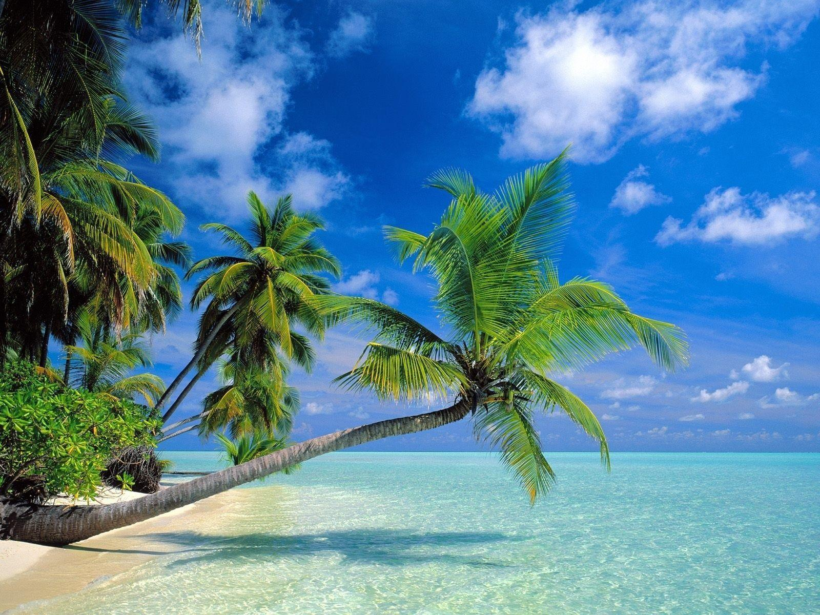 Tropical Beach Wallpapers and Background