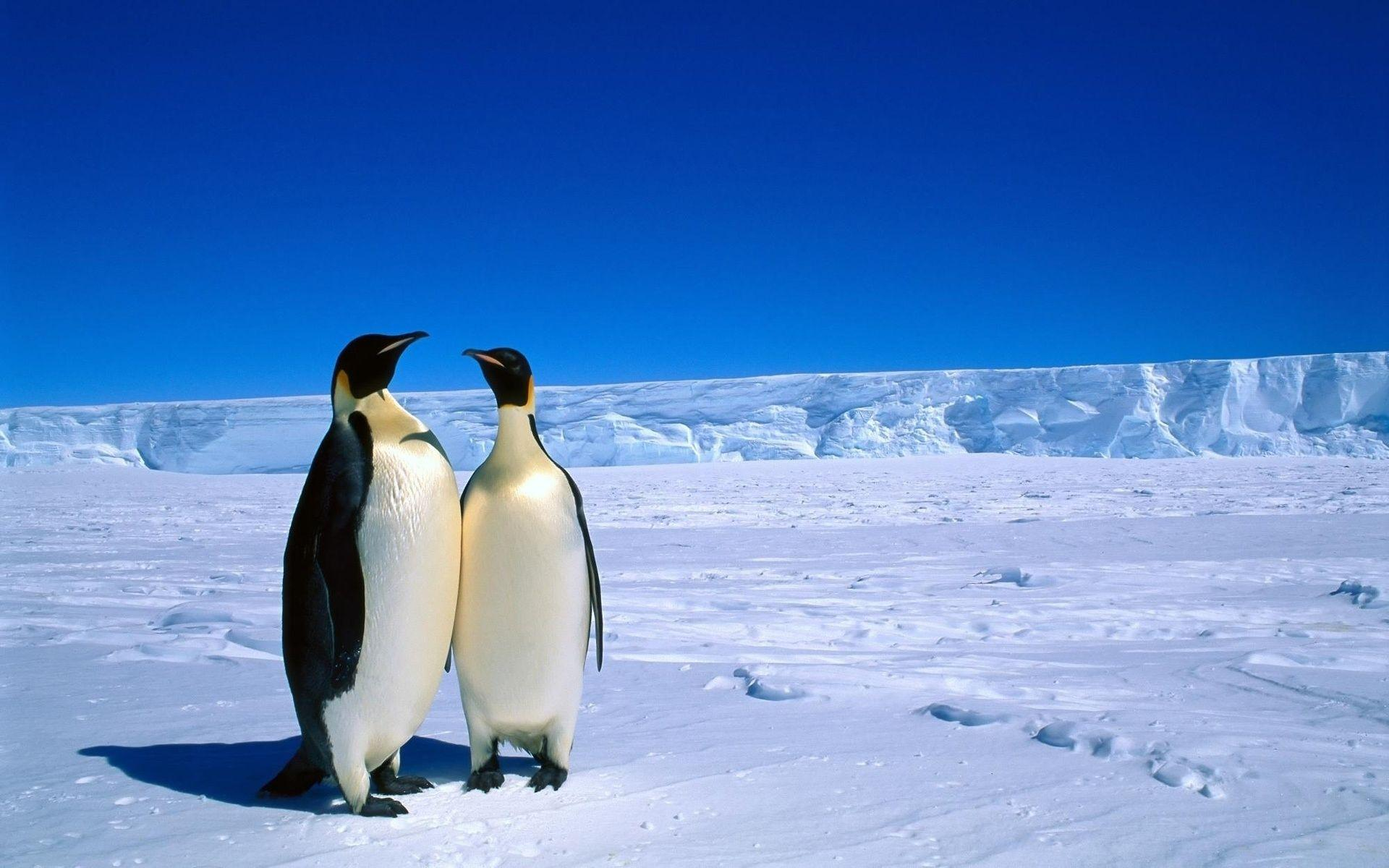 Adorable Antarctica Wallpapers 28849 1920x1200 px ~ HDWallSource
