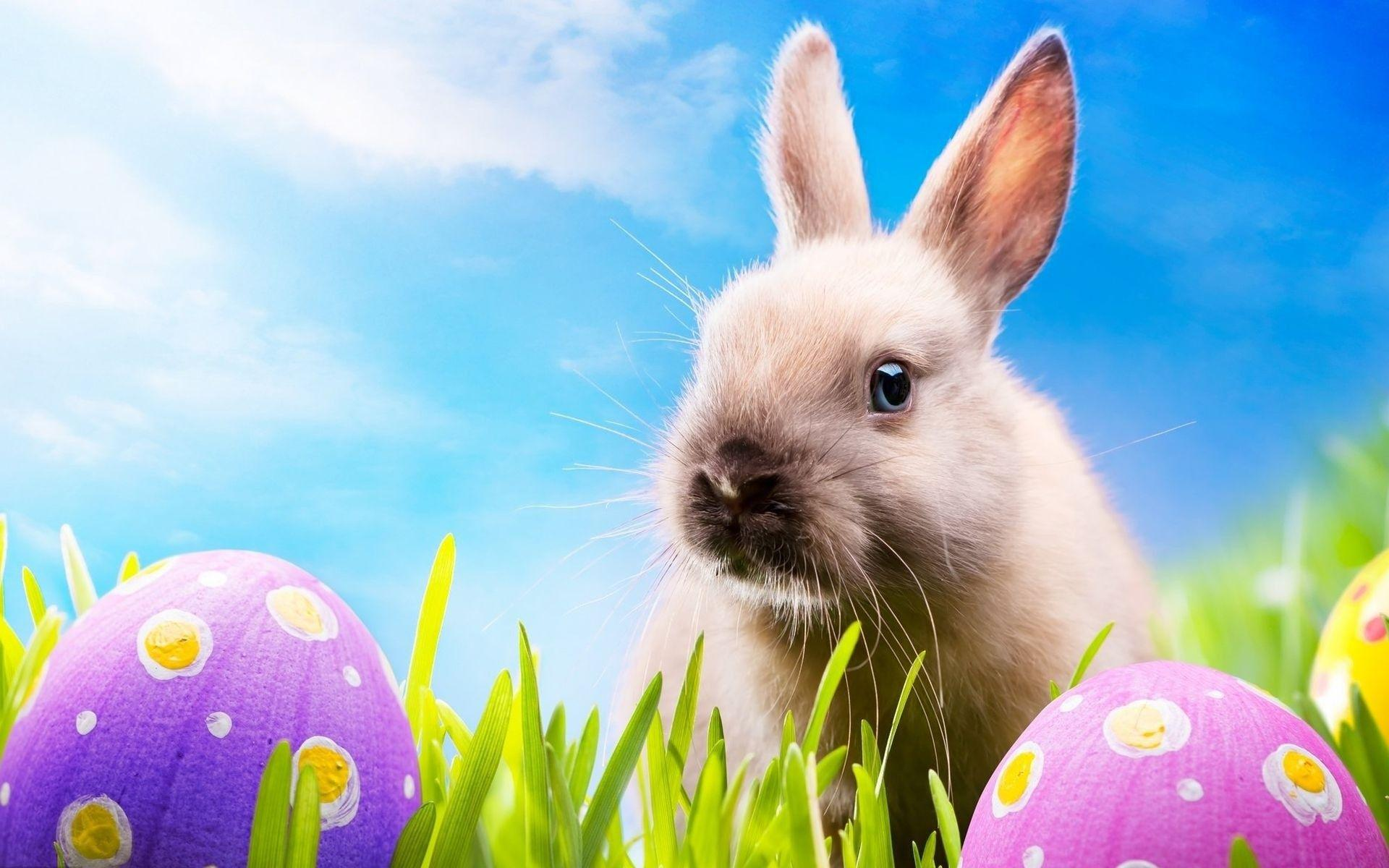 Cute Easter Backgrounds