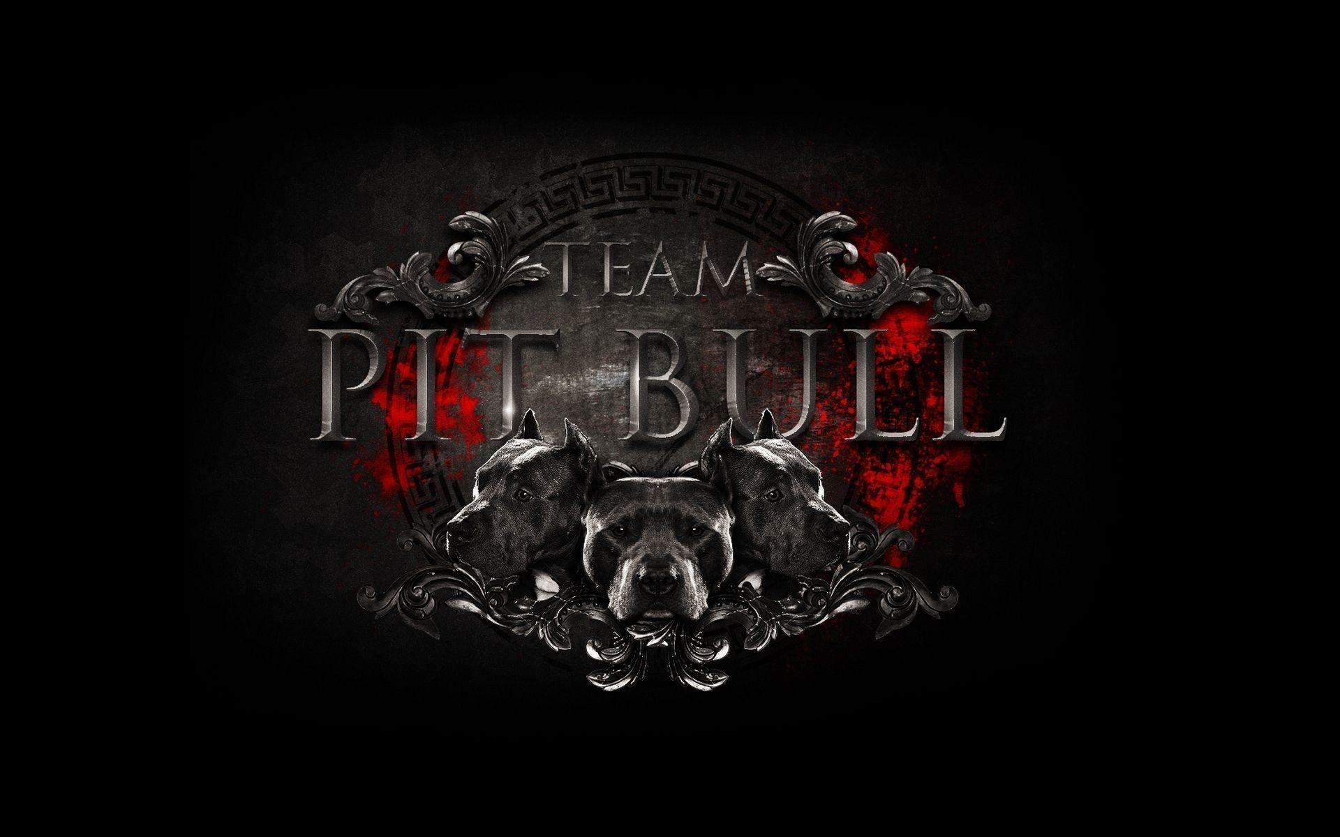 Images For > Pit Bulls Wallpaper