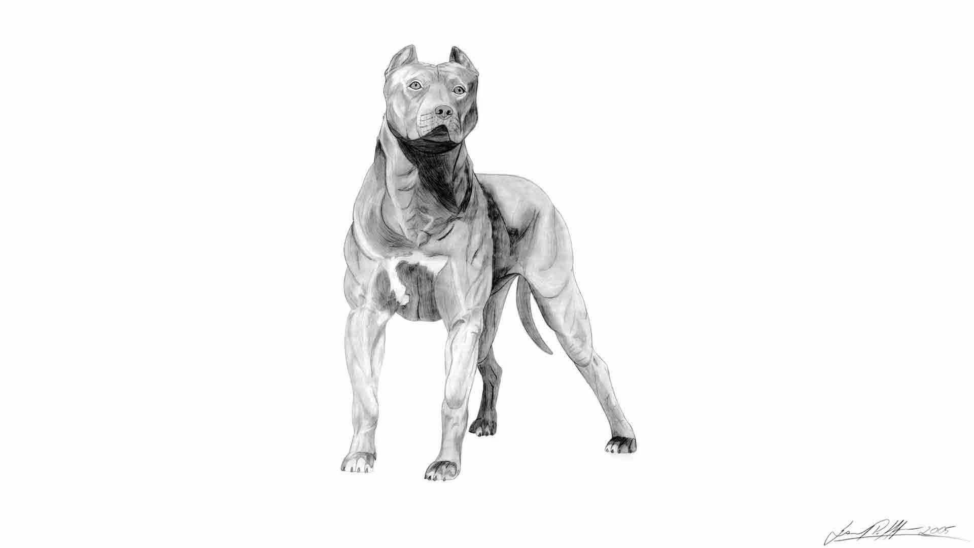 Pitbull Dog Wallpapers #6975118
