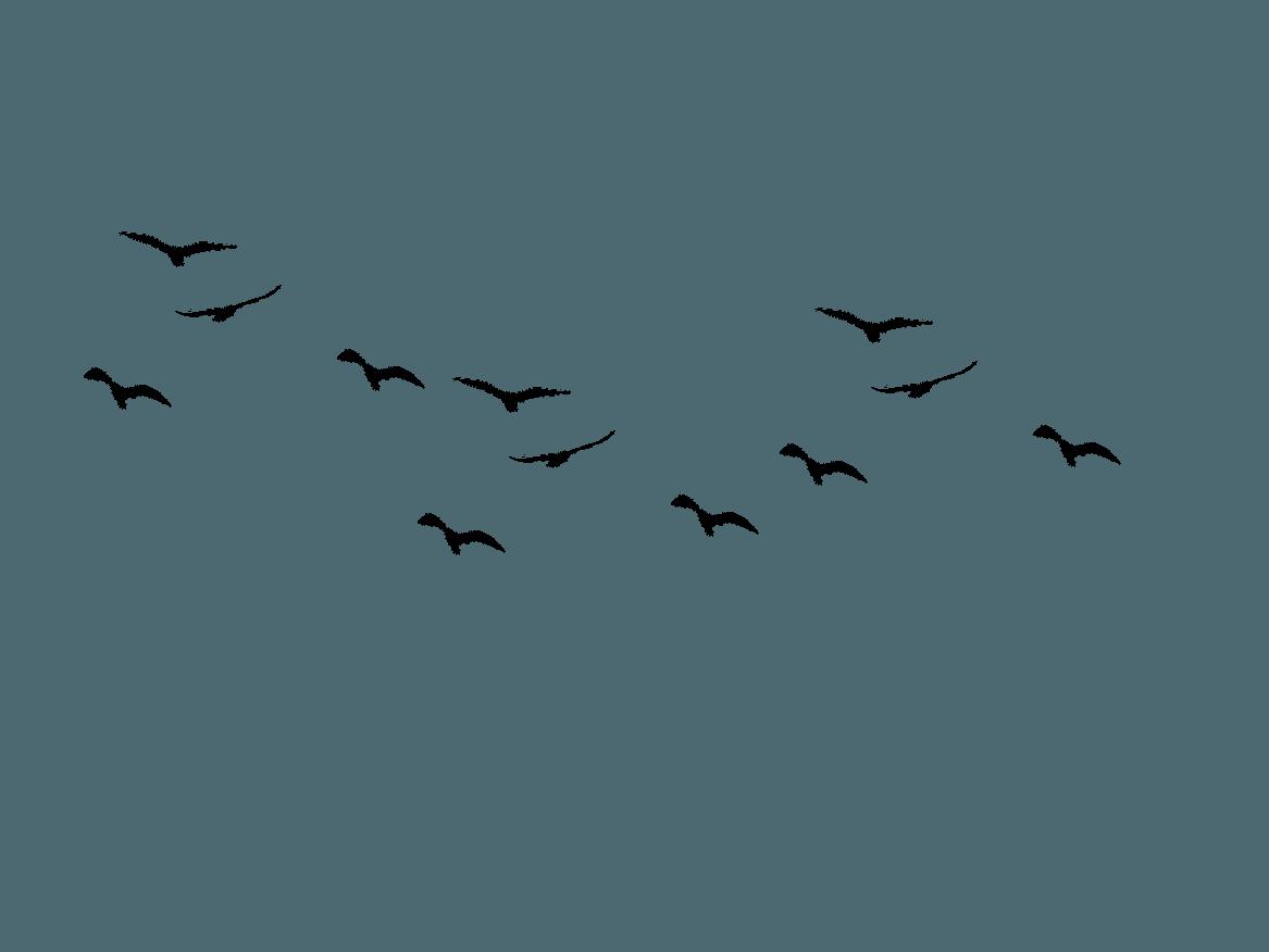 pdf Эффективные программы лояльности. Как привлечь и удержать
