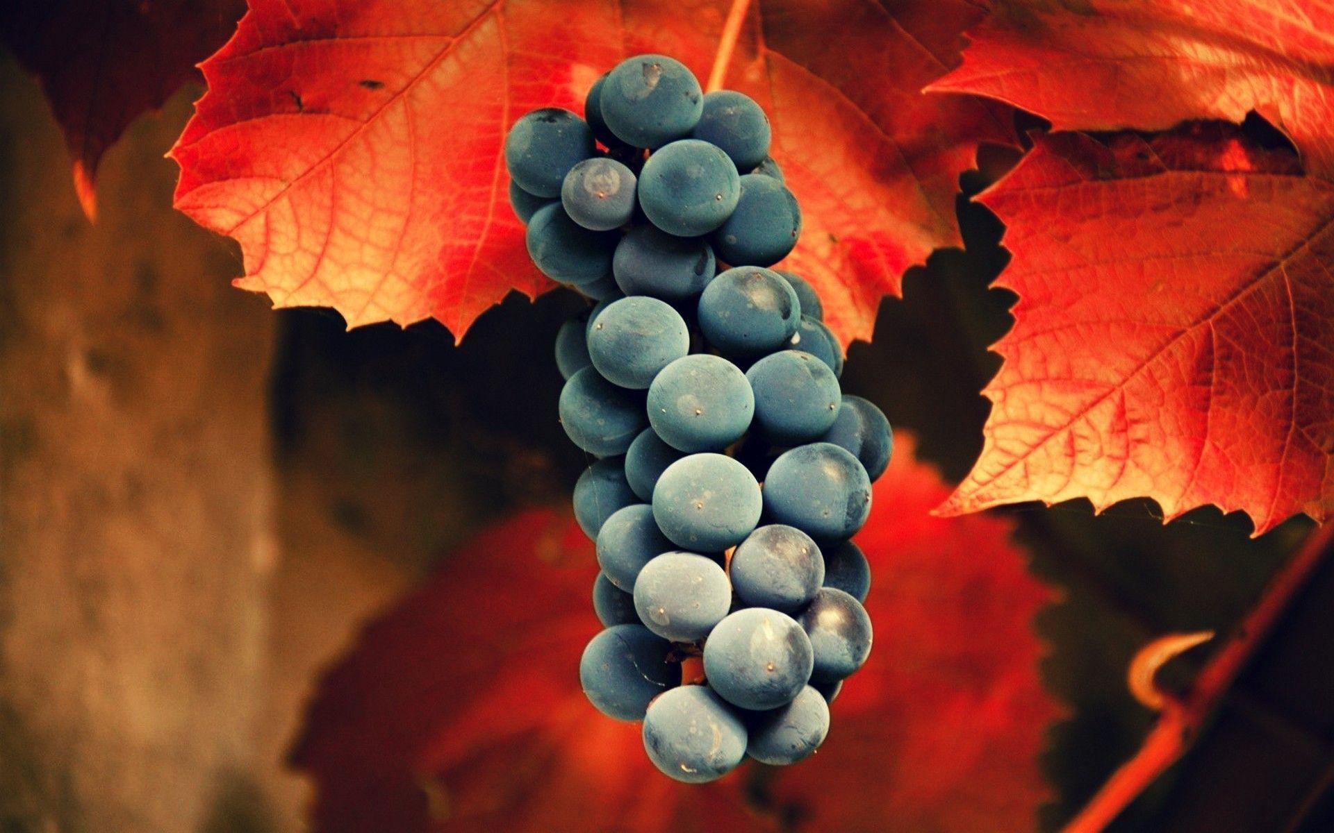 Grapes Wallpapers - Wallpaper Cave