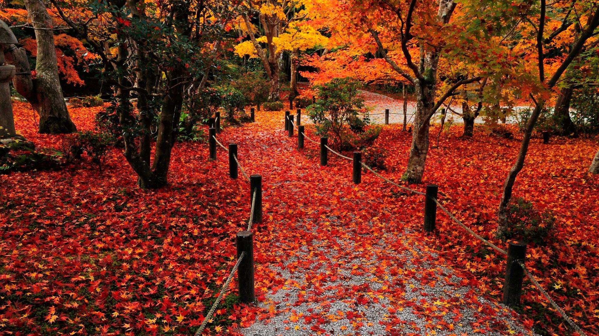 Autumn Leaves Wallpapers - Wallpaper Cave