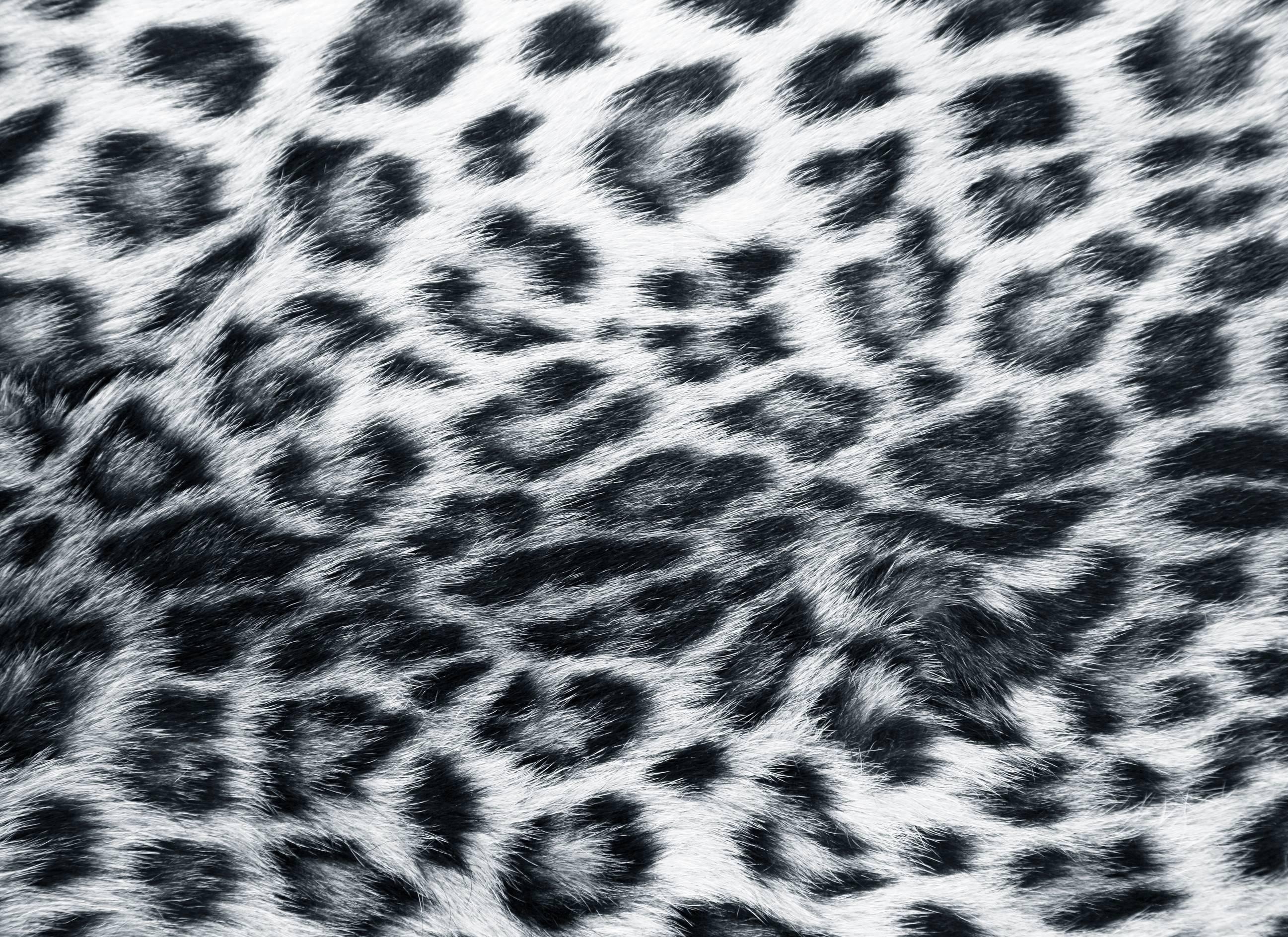 white cheetah wallpaper hd - photo #17