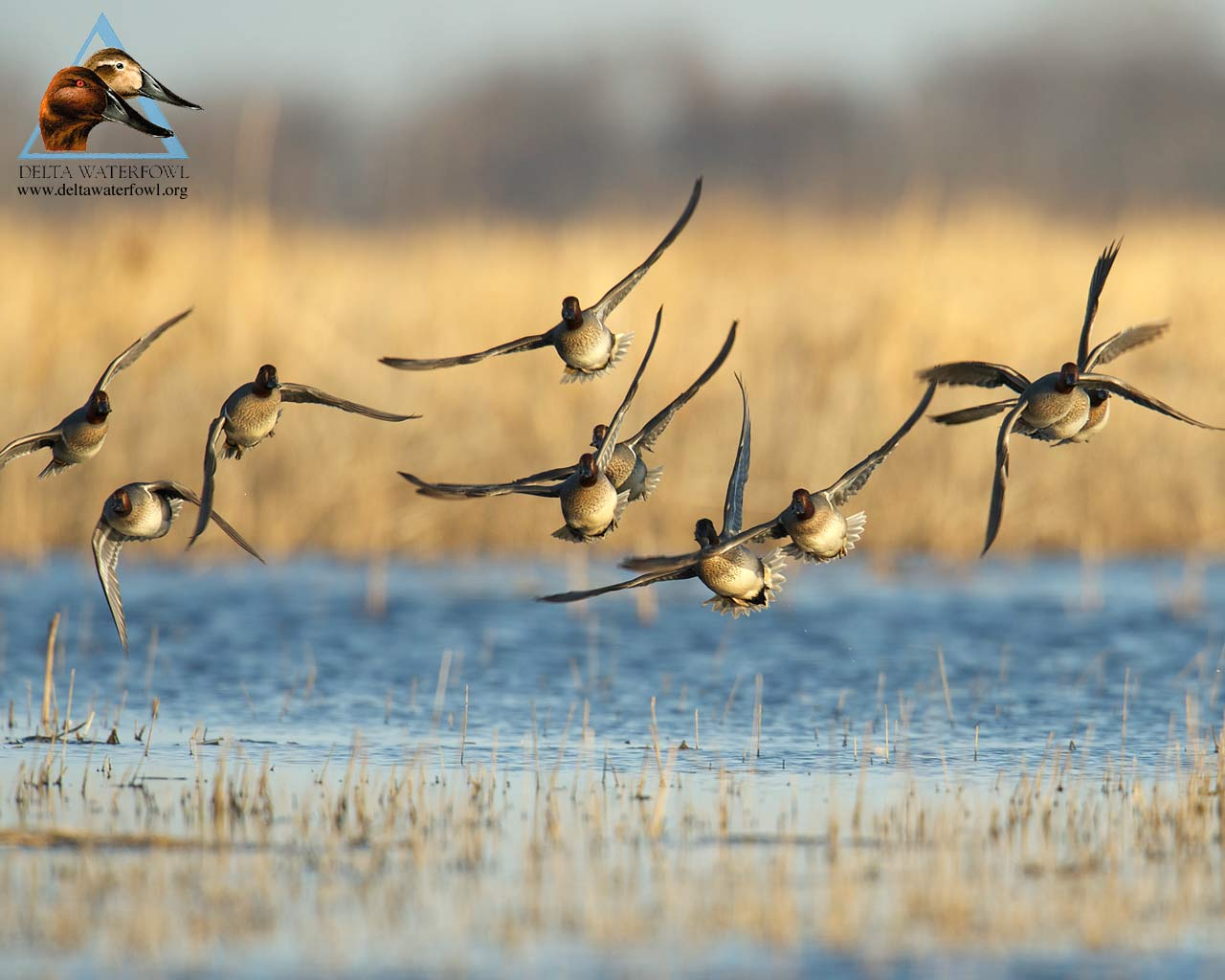 duck hunting backgrounds wallpaper cave