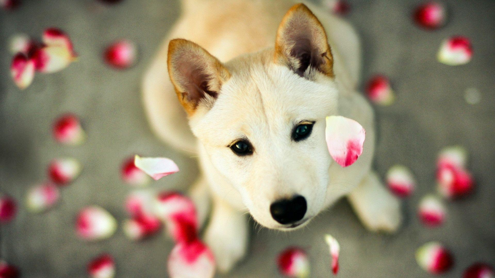Wallpapers For > Cute Dog Desktop Wallpapers