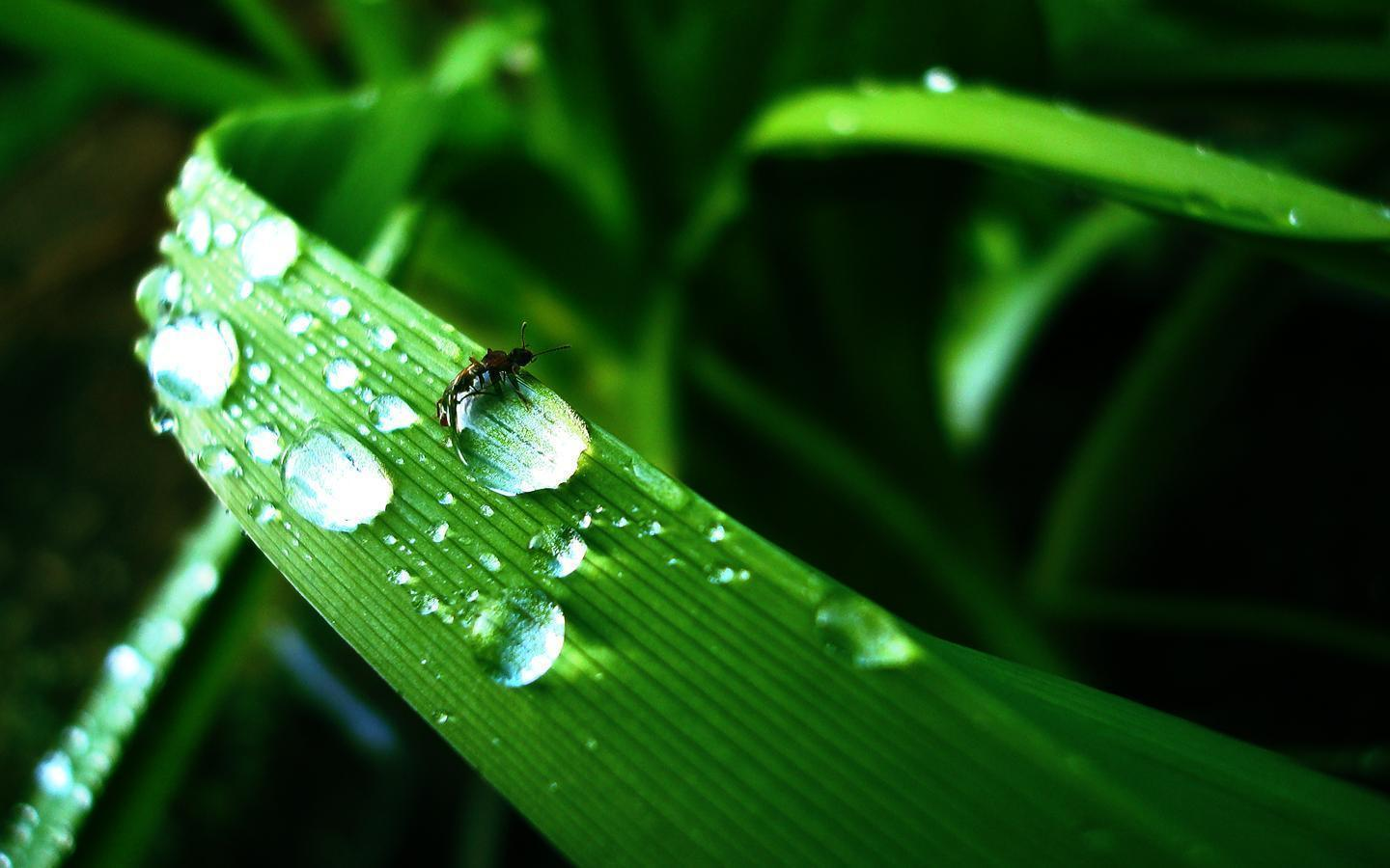hd wallpapers water drops - photo #21