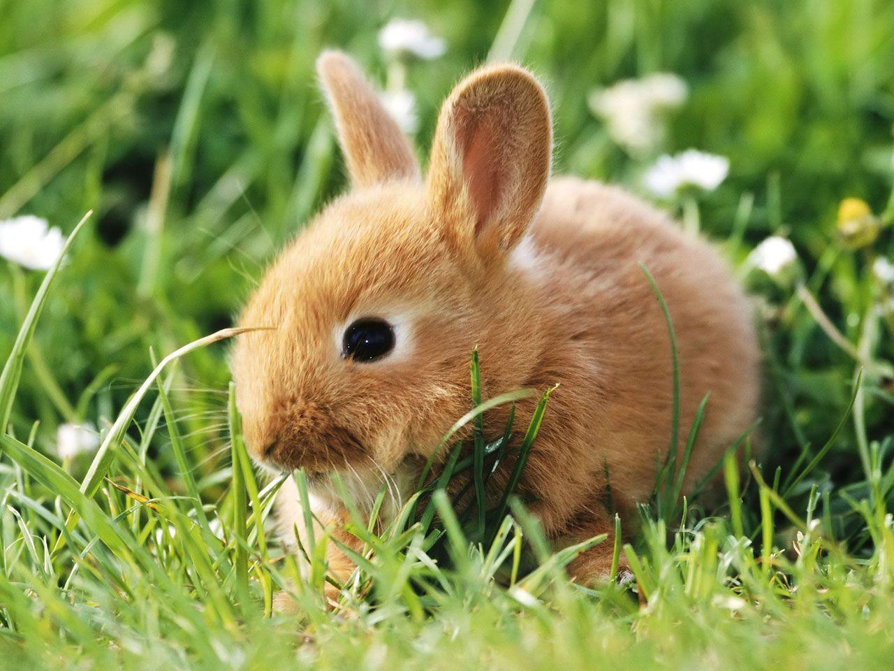 Cute Baby Bunny Wallpaper