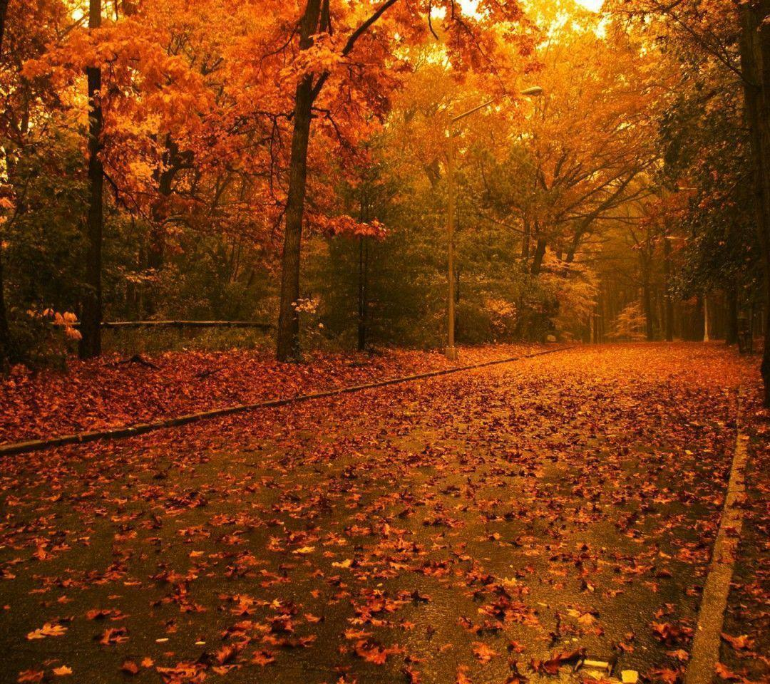 Wallpapers For Desktop: Free Autumn Wallpapers For Desktop