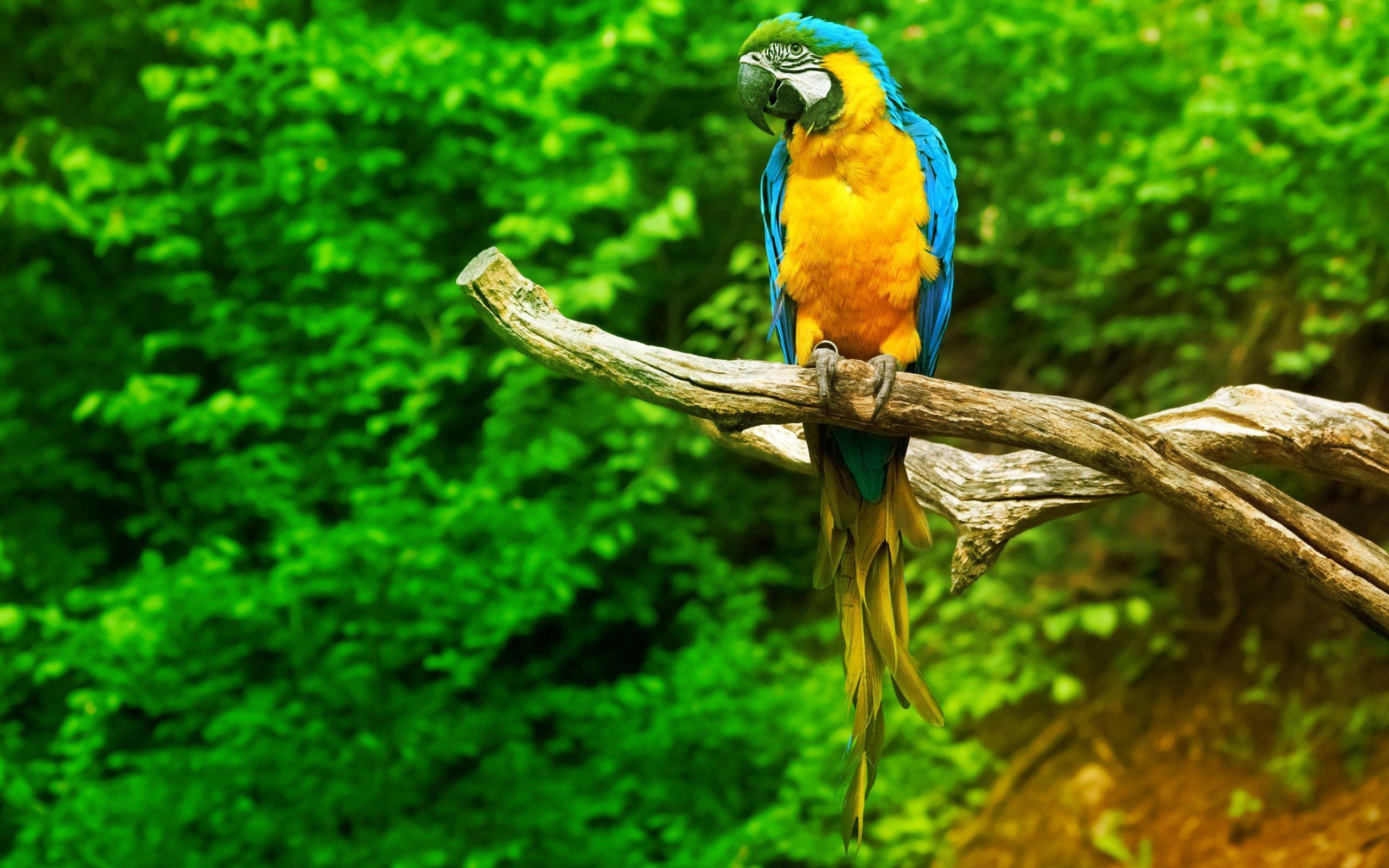 Sitting Macaw Parrot Wallpapers | Pictures