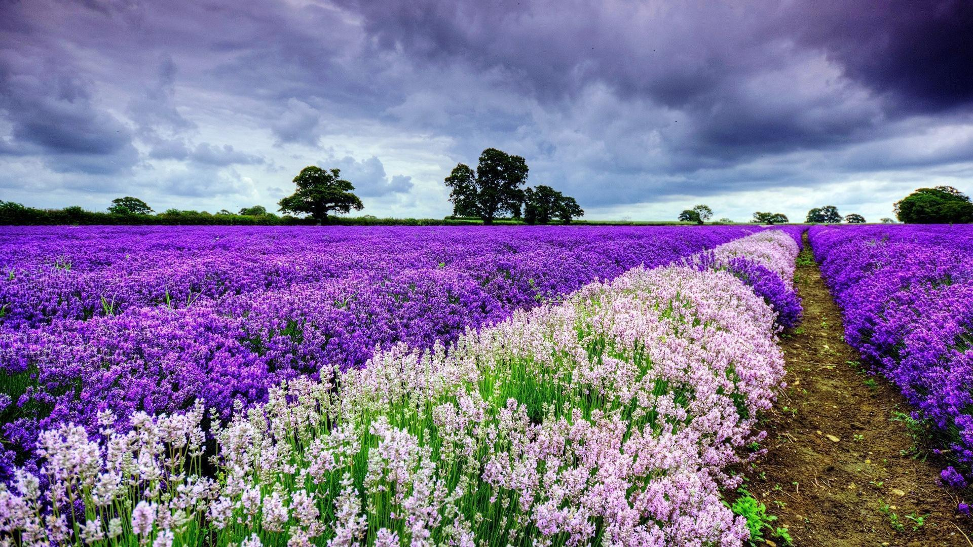 Spring Flowers Wallpapers Free - Wallpaper Cave