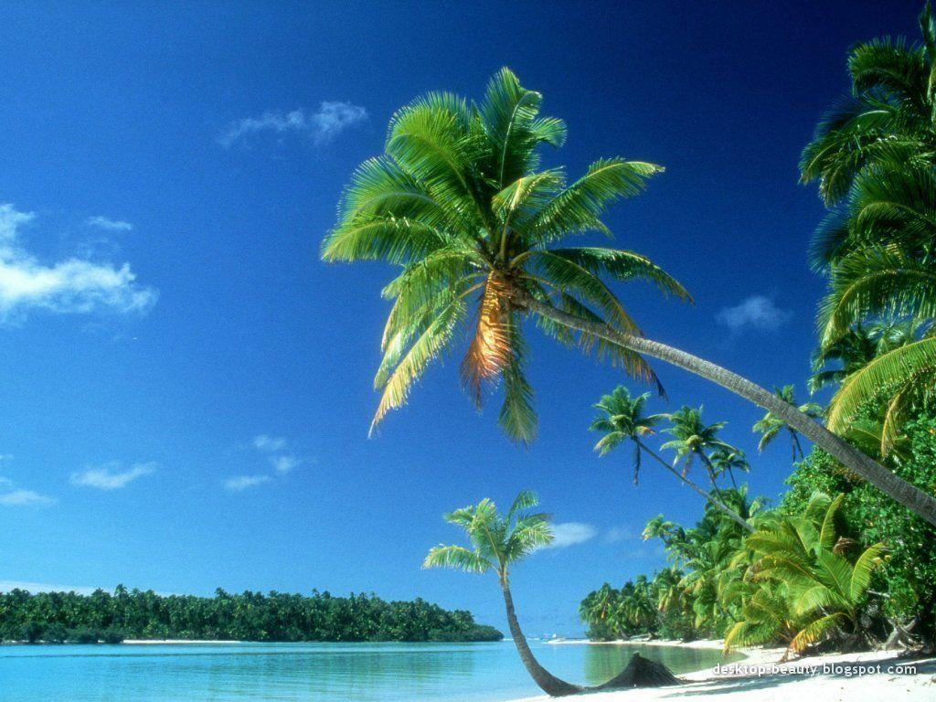 20 tropical backgrounds - photo #9