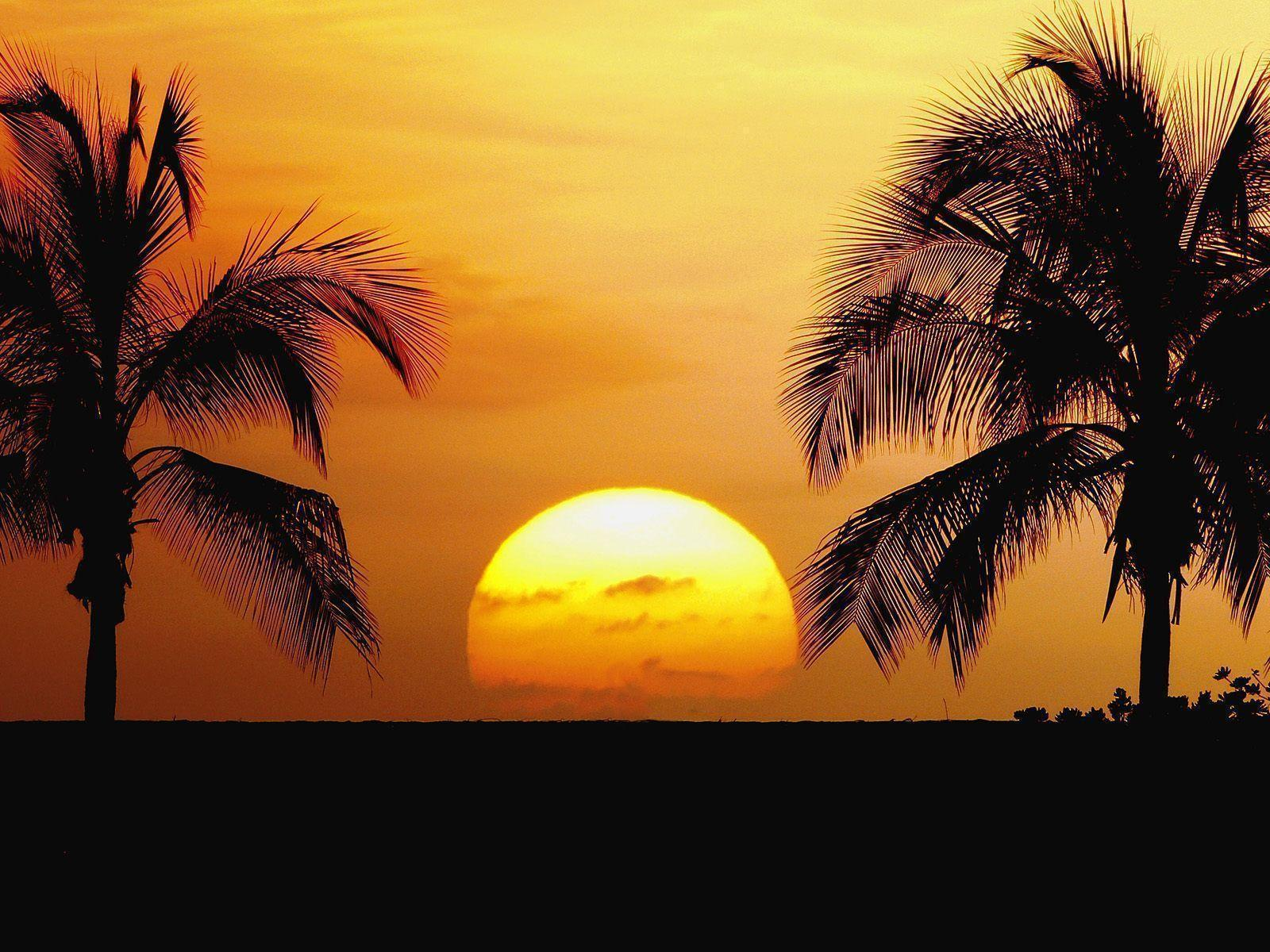 Sunset Beach Palm Tress HD Wallpaper Desktop Backgrounds Free