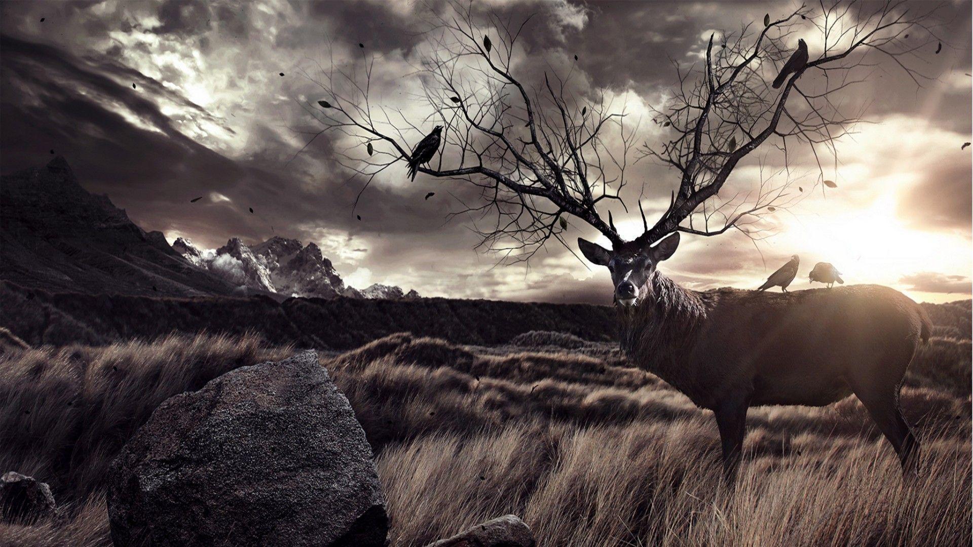 deer hunting wallpaper hd - photo #15