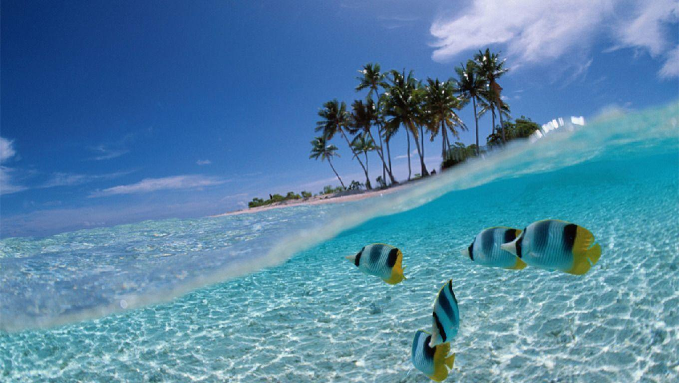 Tropical Fish Wallpapers Free