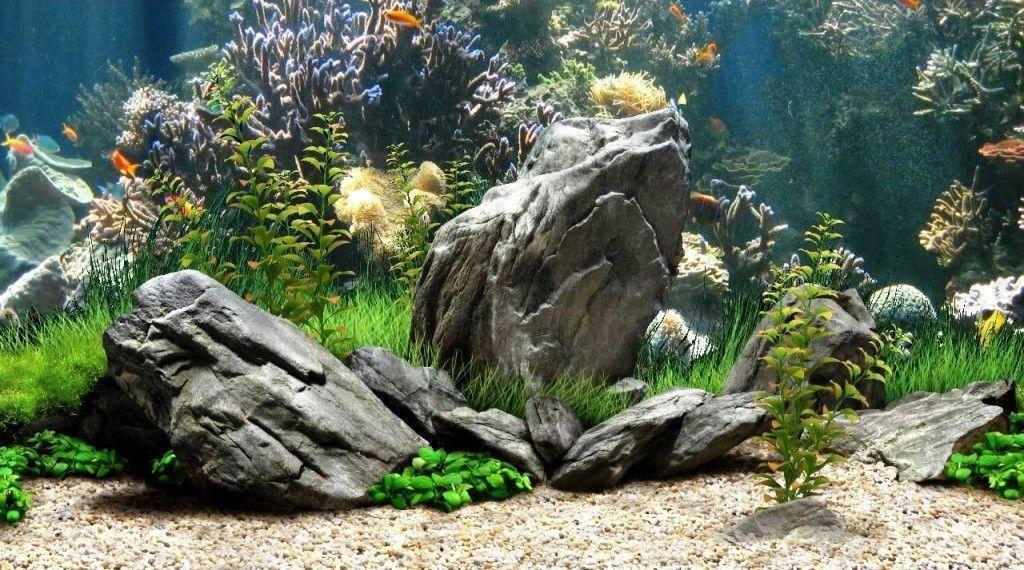 Aquarium Backgrounds 8 Background HD | wallpaperhd77.com