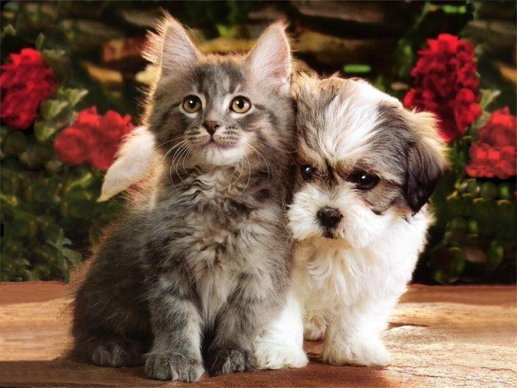 Wallpapers For > Cute Puppies And Kittens Wallpapers
