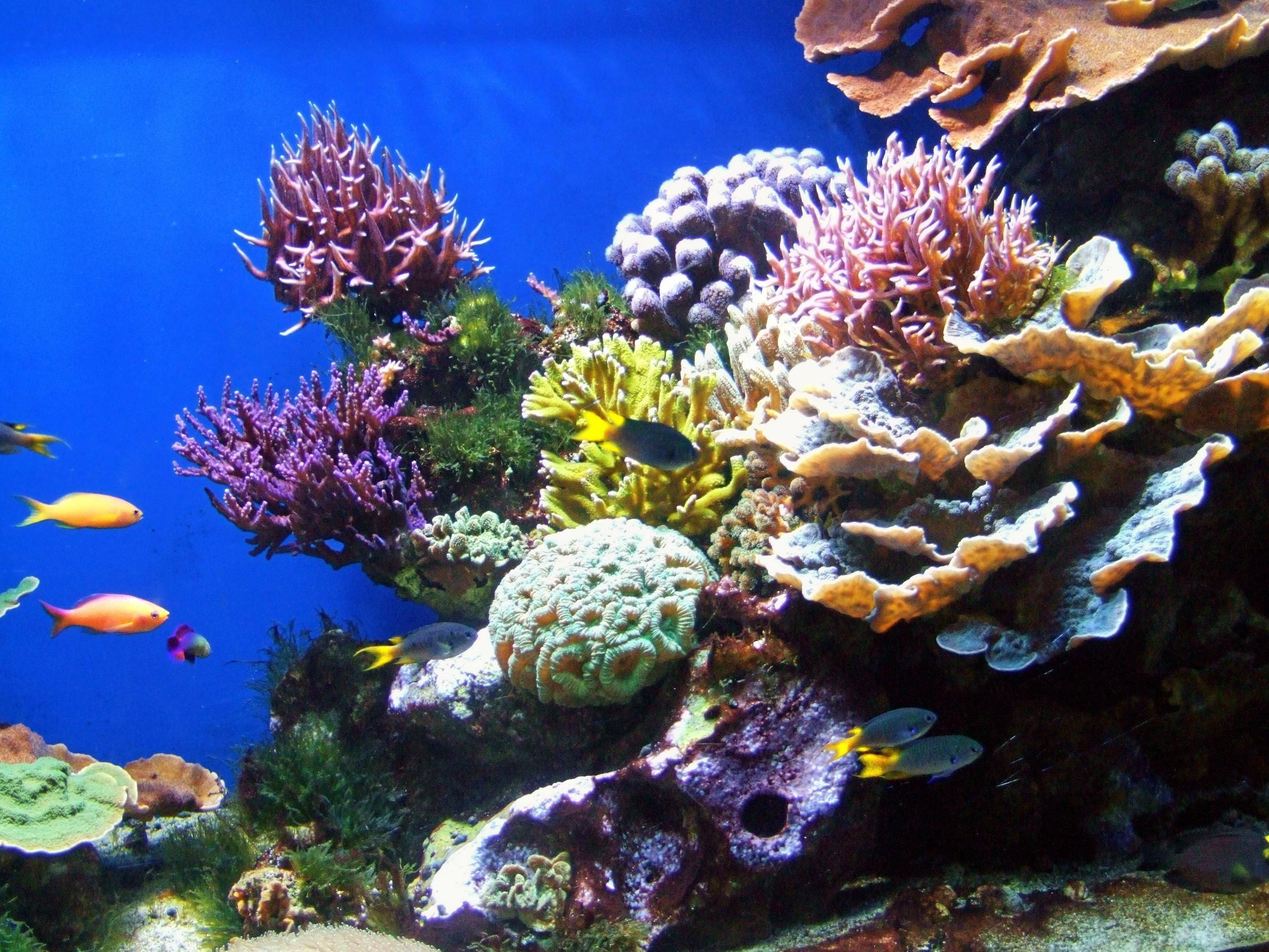 aquarium backgrounds coral - photo #34