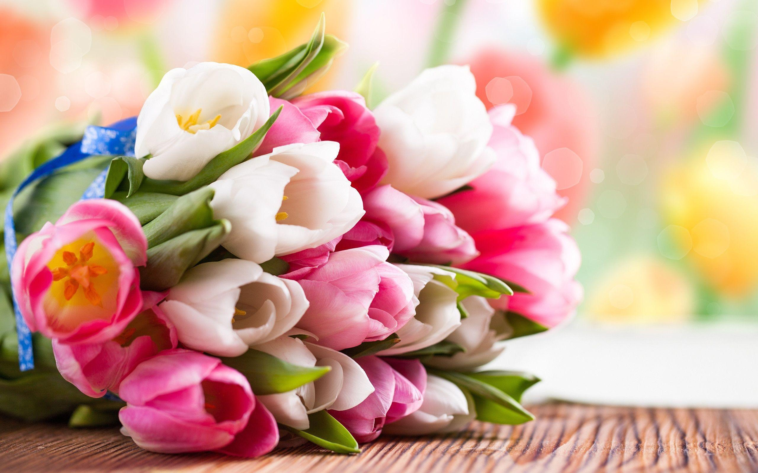 Pink and white tulip flower bouquet Wallpapers